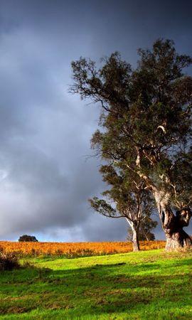21966 скачать обои Пейзаж, Деревья, Трава - заставки и картинки бесплатно