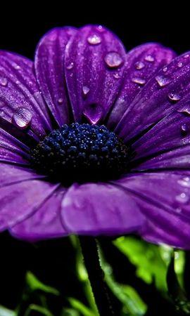 16003 descargar fondo de pantalla Plantas, Flores: protectores de pantalla e imágenes gratis