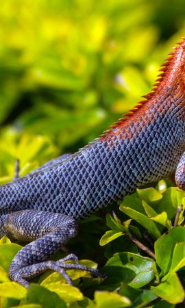 134097 download wallpaper Animals, Lizard, Reptile, Grass, Scales, Scale screensavers and pictures for free