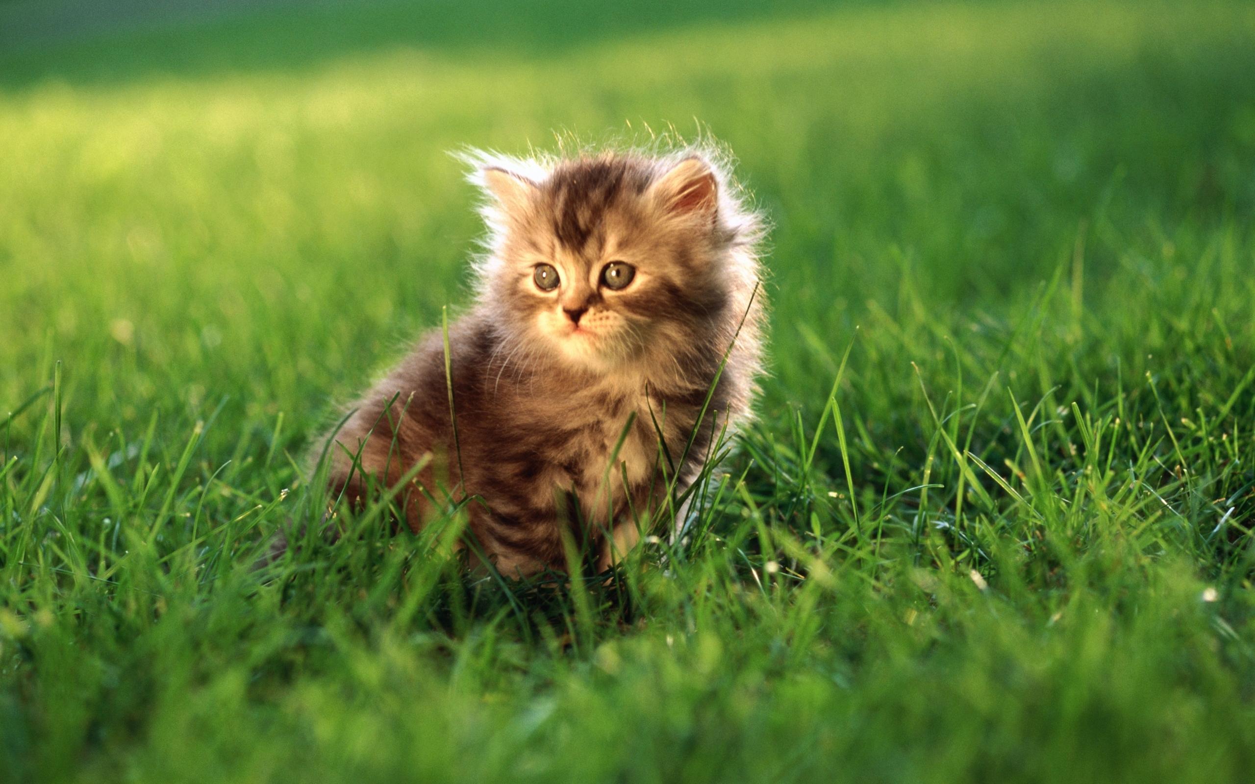42637 обои 1440x2560 на телефон бесплатно, скачать картинки Кошки (Коты, Котики), Животные 1440x2560 на мобильный