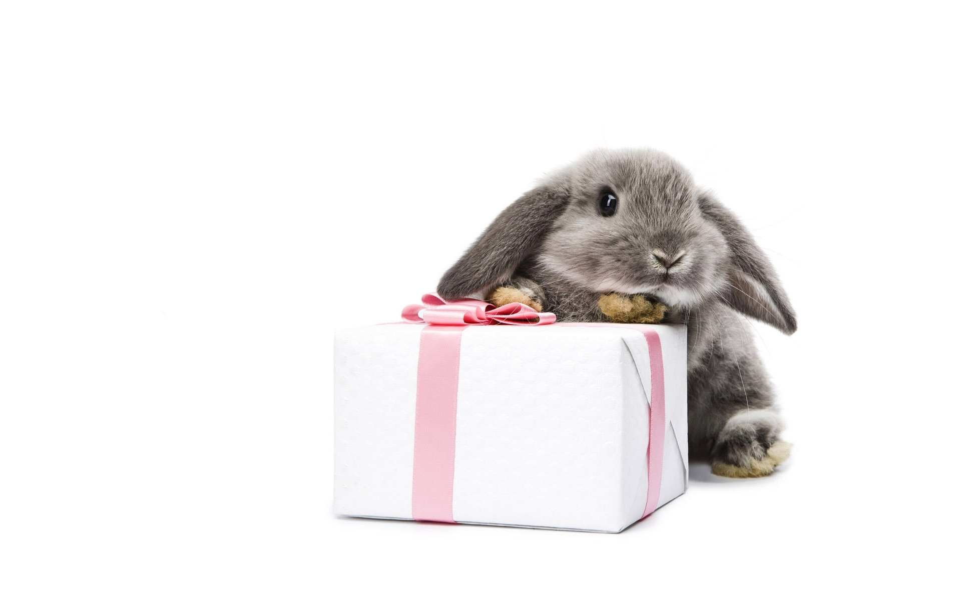 48766 download wallpaper Animals, Rabbits screensavers and pictures for free