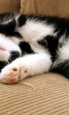 75988壁紙のダウンロード動物, ネコ, 猫, 睡眠, 夢, 遊び心, 遊戯的, 発見, むら, 横になります, 嘘, 足-スクリーンセーバーと写真を無料で