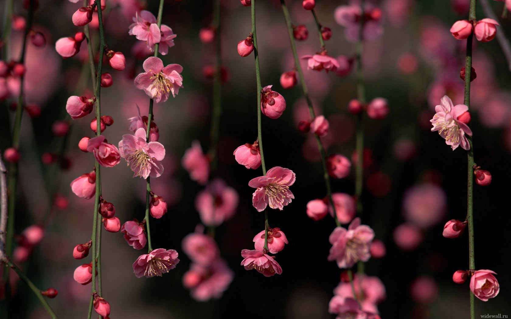 6044 download wallpaper Flowers, Plants, Background screensavers and pictures for free