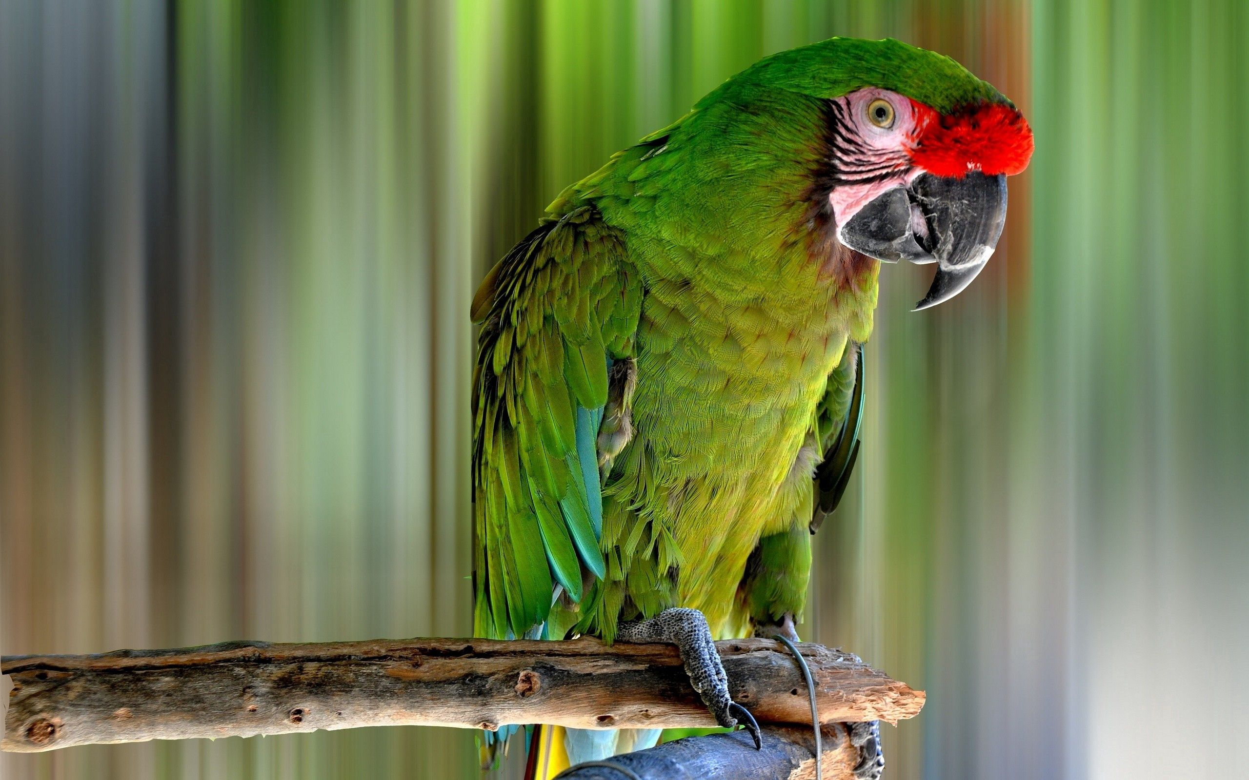 144980 download wallpaper Animals, Parrots, Bird, Color screensavers and pictures for free