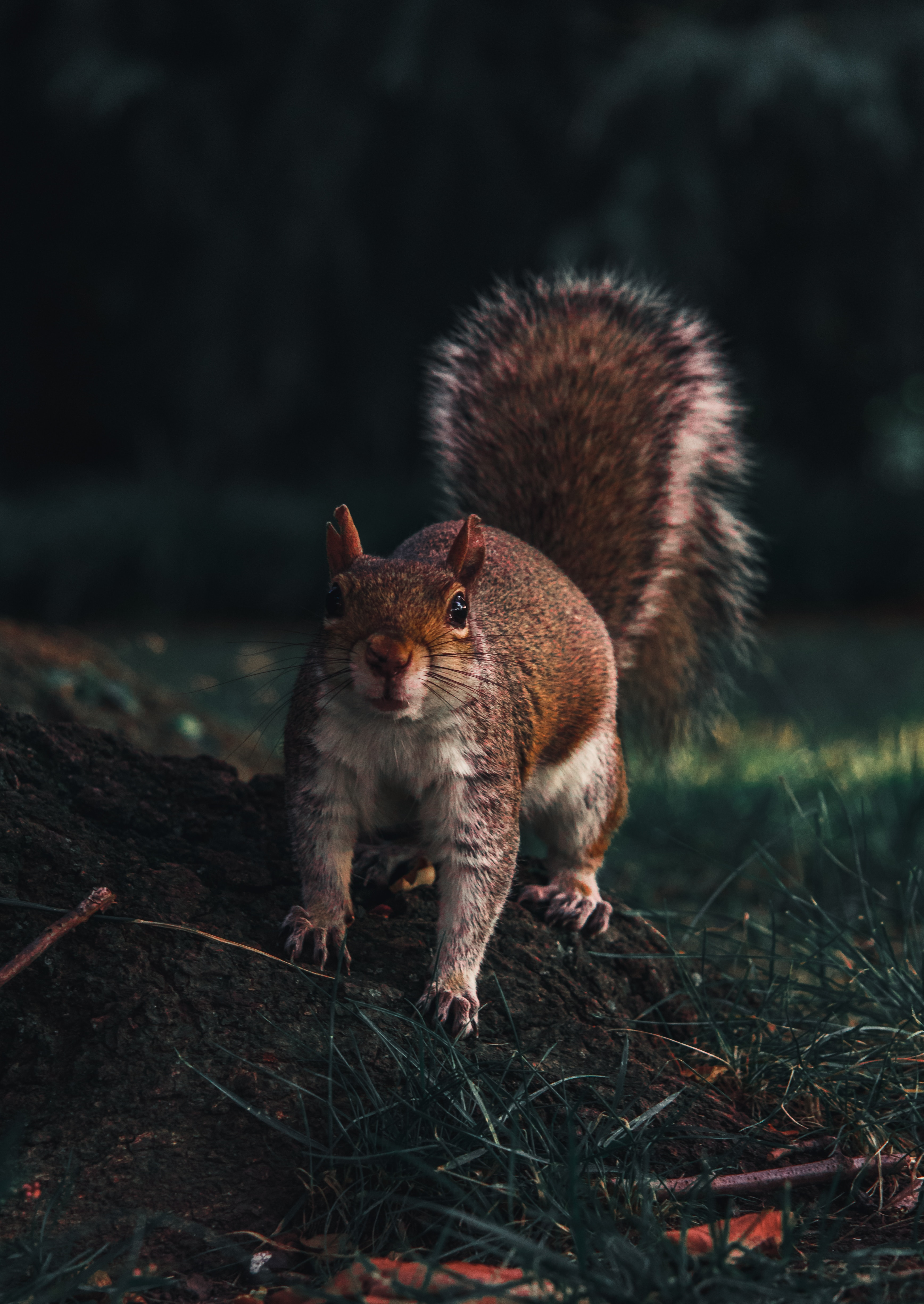 133645 download wallpaper Funny, Animals, Squirrel, Sight, Opinion, Wildlife, Animal screensavers and pictures for free