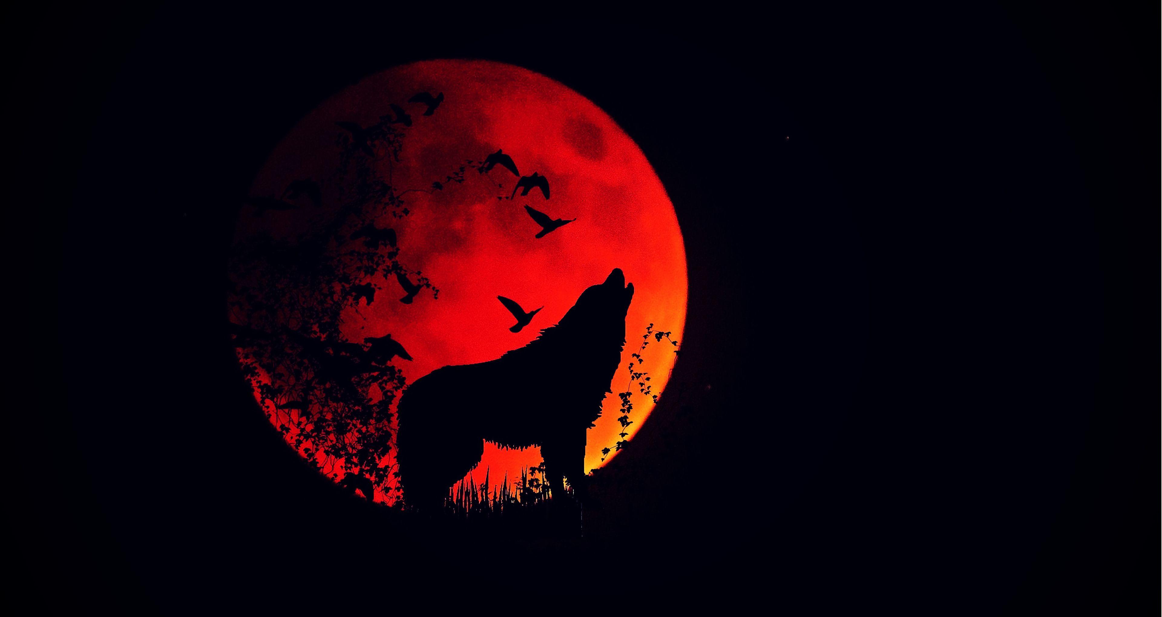 手機的61881屏保和壁紙黑暗。 免費下載 黑暗的, 黑暗, 狼, 嗥, 高, 轮廓, 剪影, 满月, 火红的月亮, 火月 圖片