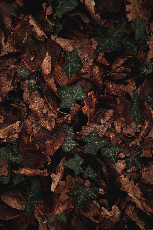 70605 скачать обои Листья, Растение, Макро, Коричневый, Зеленый, Сухой - заставки и картинки бесплатно