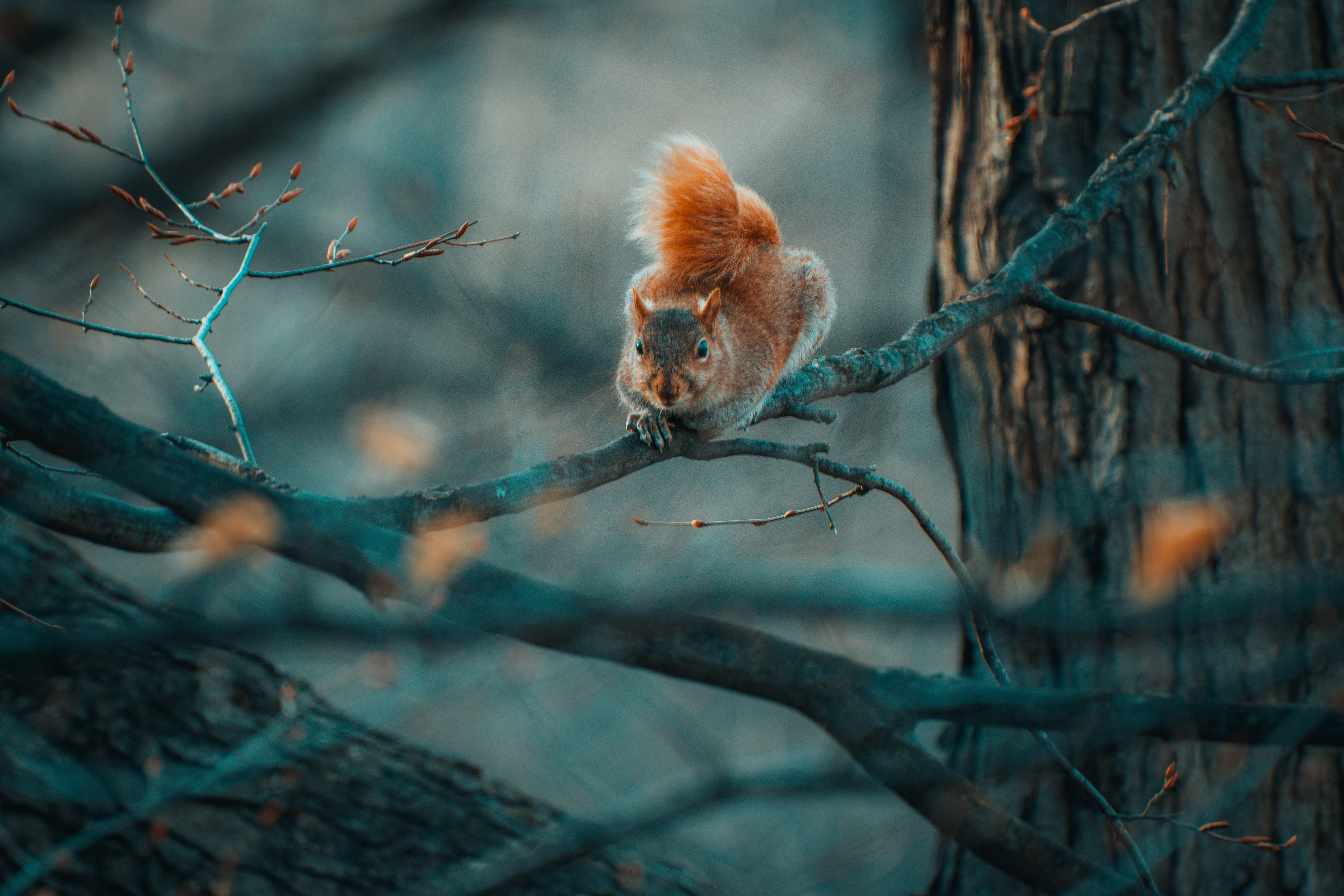 Download mobile wallpaper Wildlife, Squirrel, Animals, Branches, Funny for free.