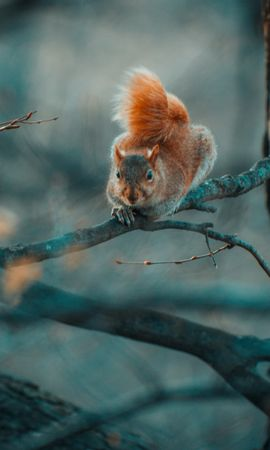 104038 download wallpaper Animals, Squirrel, Funny, Branches, Wildlife screensavers and pictures for free