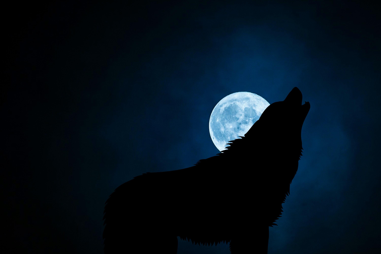 121132 Protetores de tela e papéis de parede Lua em seu telefone. Baixe Lua, Escuro, Noite, Silhueta, Lobo fotos gratuitamente