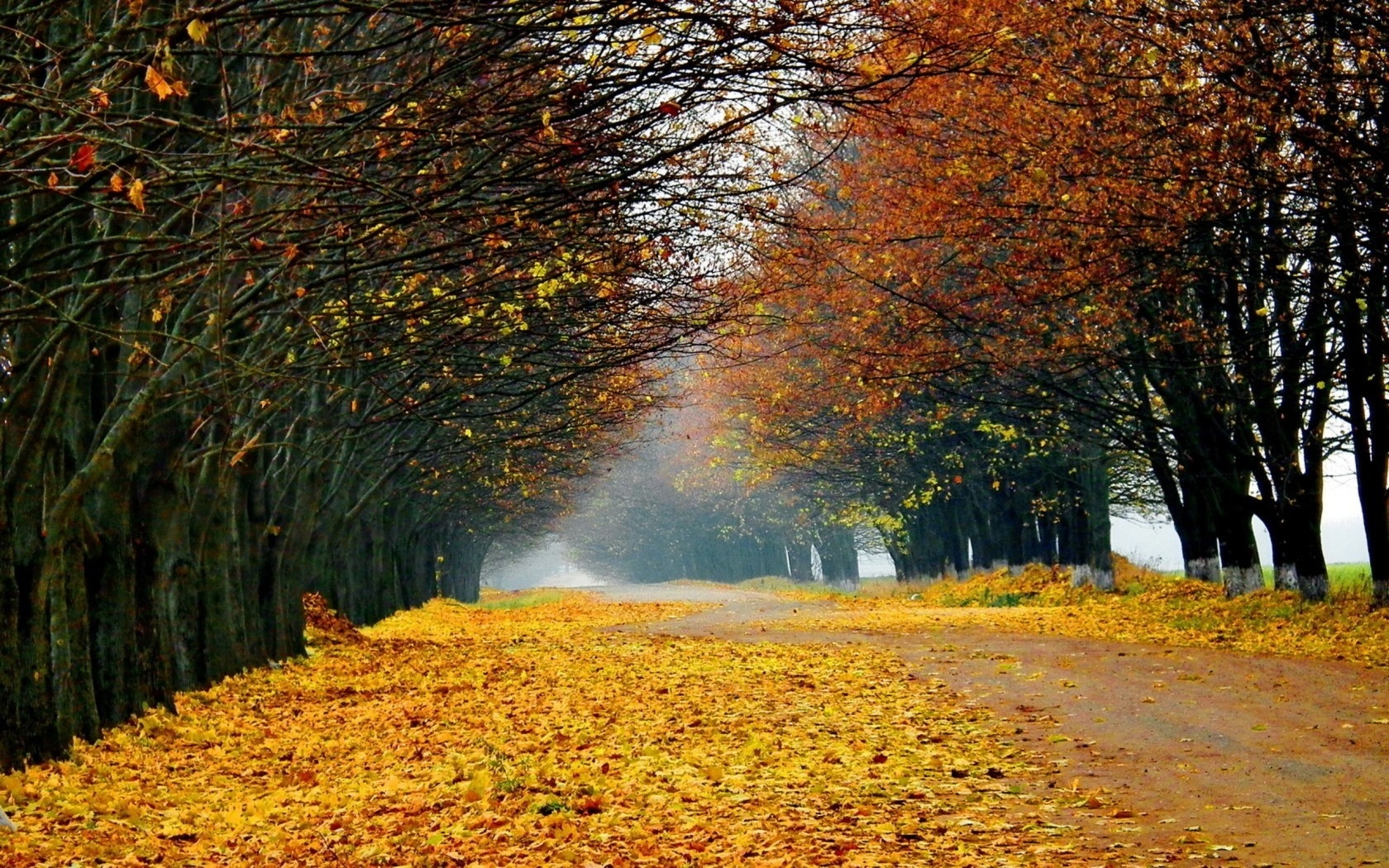 17570 скачать обои Пейзаж, Деревья, Дороги, Осень - заставки и картинки бесплатно