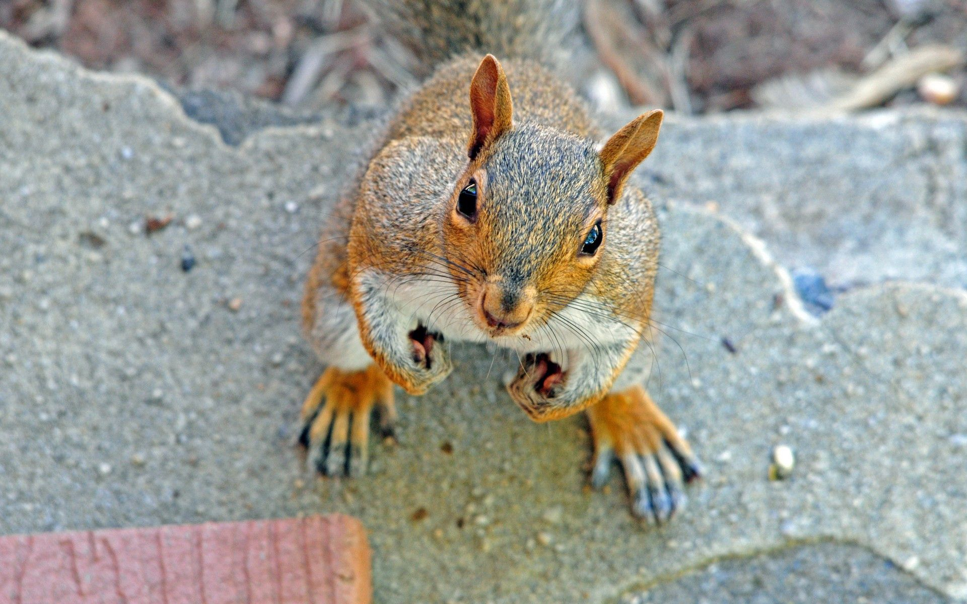 56545 download wallpaper Animals, Squirrel, Muzzle, Expectation, Waiting, Nice, Sweetheart screensavers and pictures for free