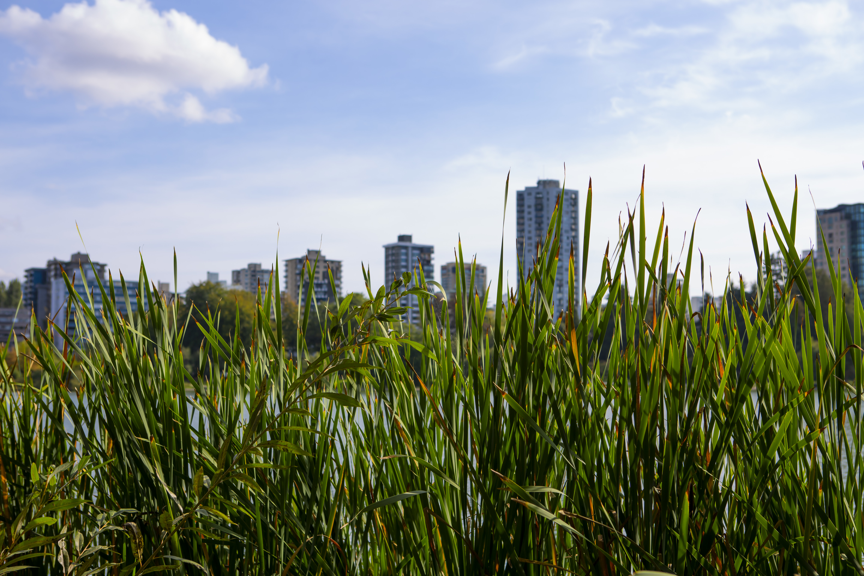 153671 скачать обои Природа, Трава, Город, Растение, Здание - заставки и картинки бесплатно
