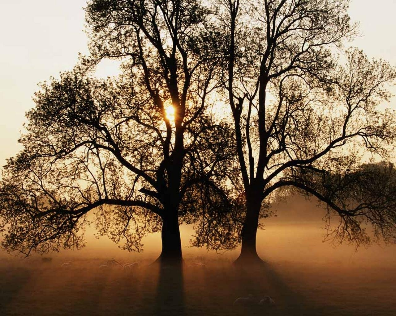 9232 скачать обои Пейзаж, Деревья, Солнце - заставки и картинки бесплатно