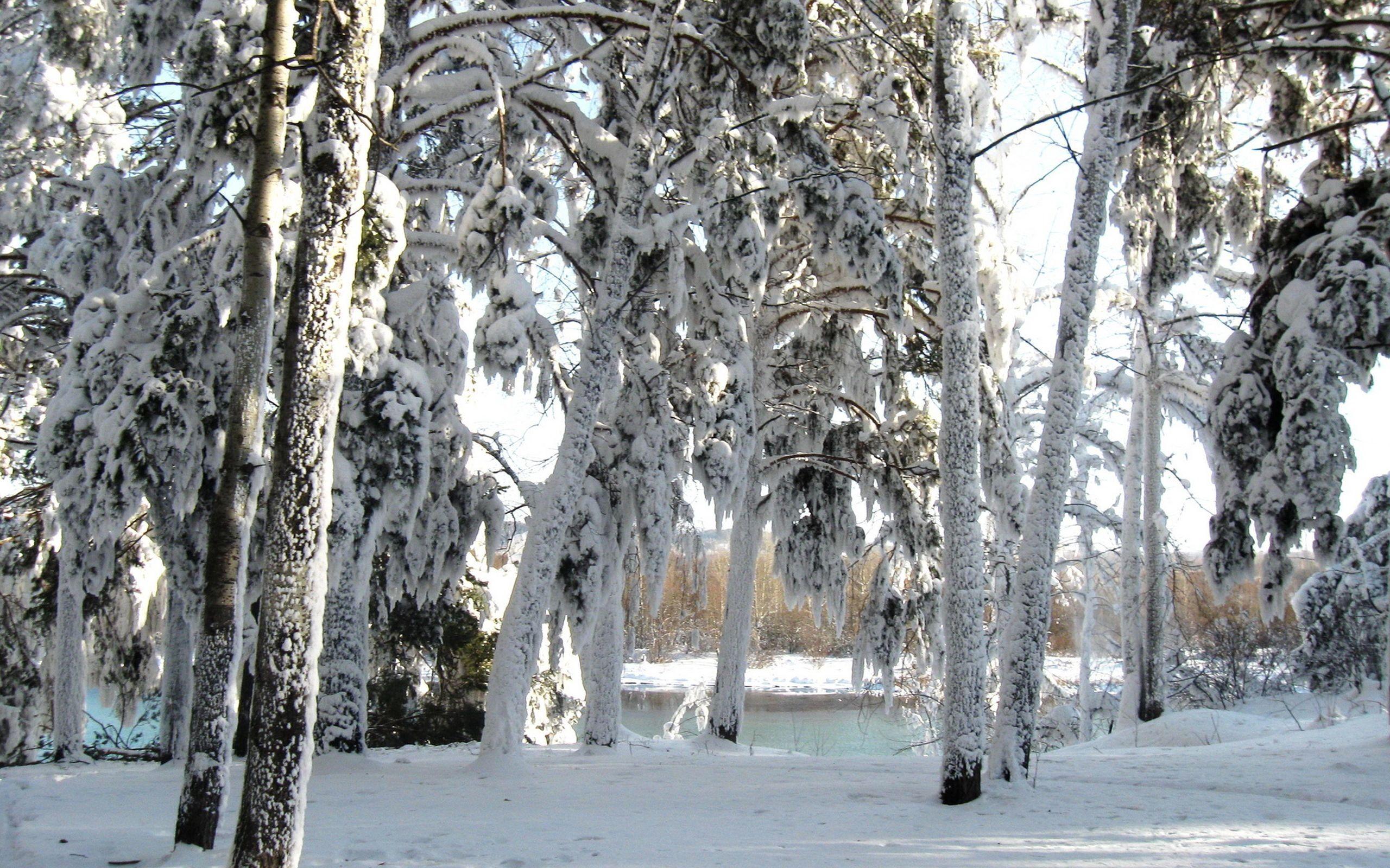 140683 Заставки и Обои Зима на телефон. Скачать Природа, Снег, Деревья, Зима картинки бесплатно