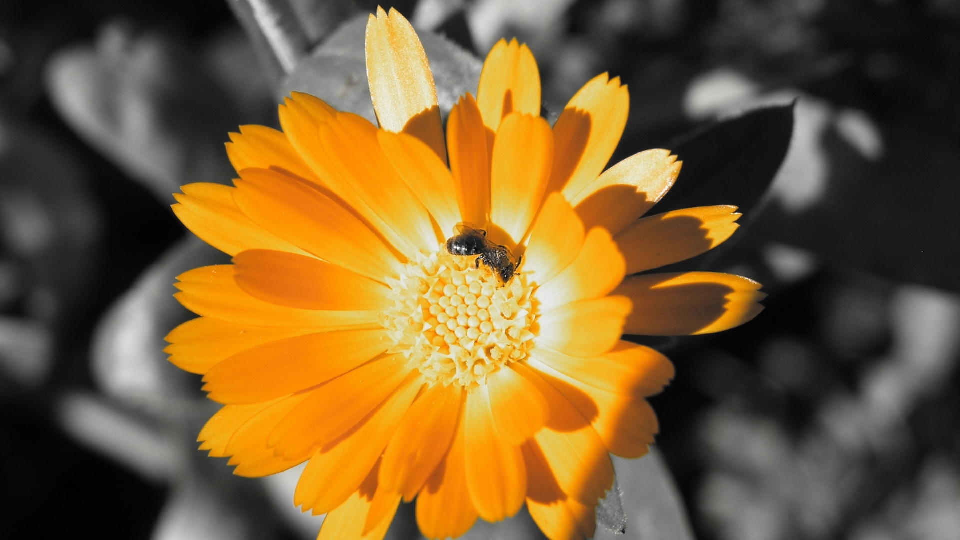 31003 Screensavers and Wallpapers Bees for phone. Download Flowers, Insects, Bees pictures for free