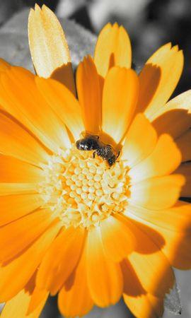 31003 Salvapantallas y fondos de pantalla Insectos en tu teléfono. Descarga imágenes de Flores, Insectos, Abejas gratis