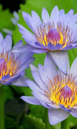 8882 скачать обои Растения, Цветы, Кувшинки - заставки и картинки бесплатно