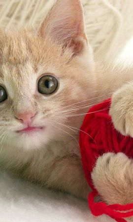4975 download wallpaper Animals, Cats screensavers and pictures for free