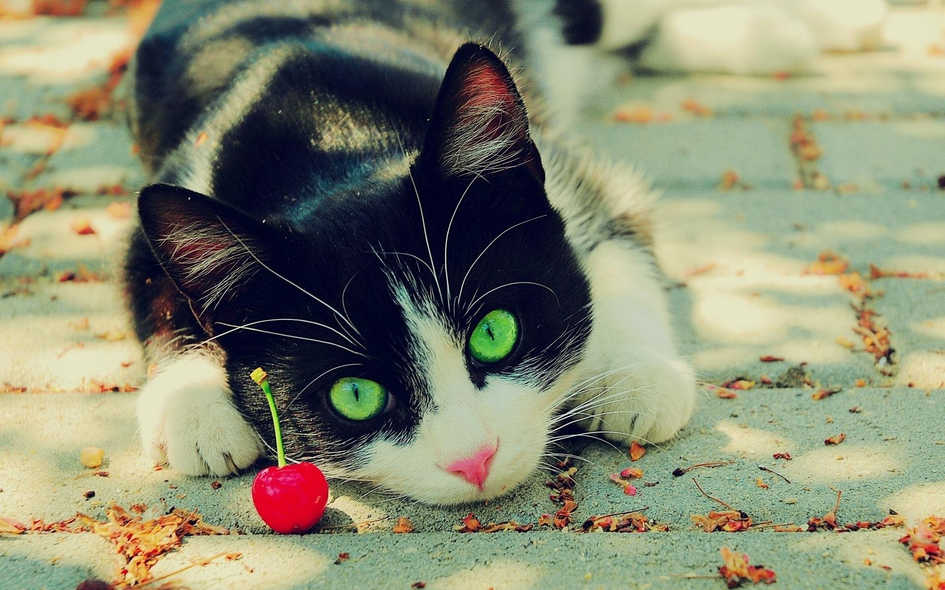 23456 скачать обои Животные, Кошки (Коты, Котики) - заставки и картинки бесплатно