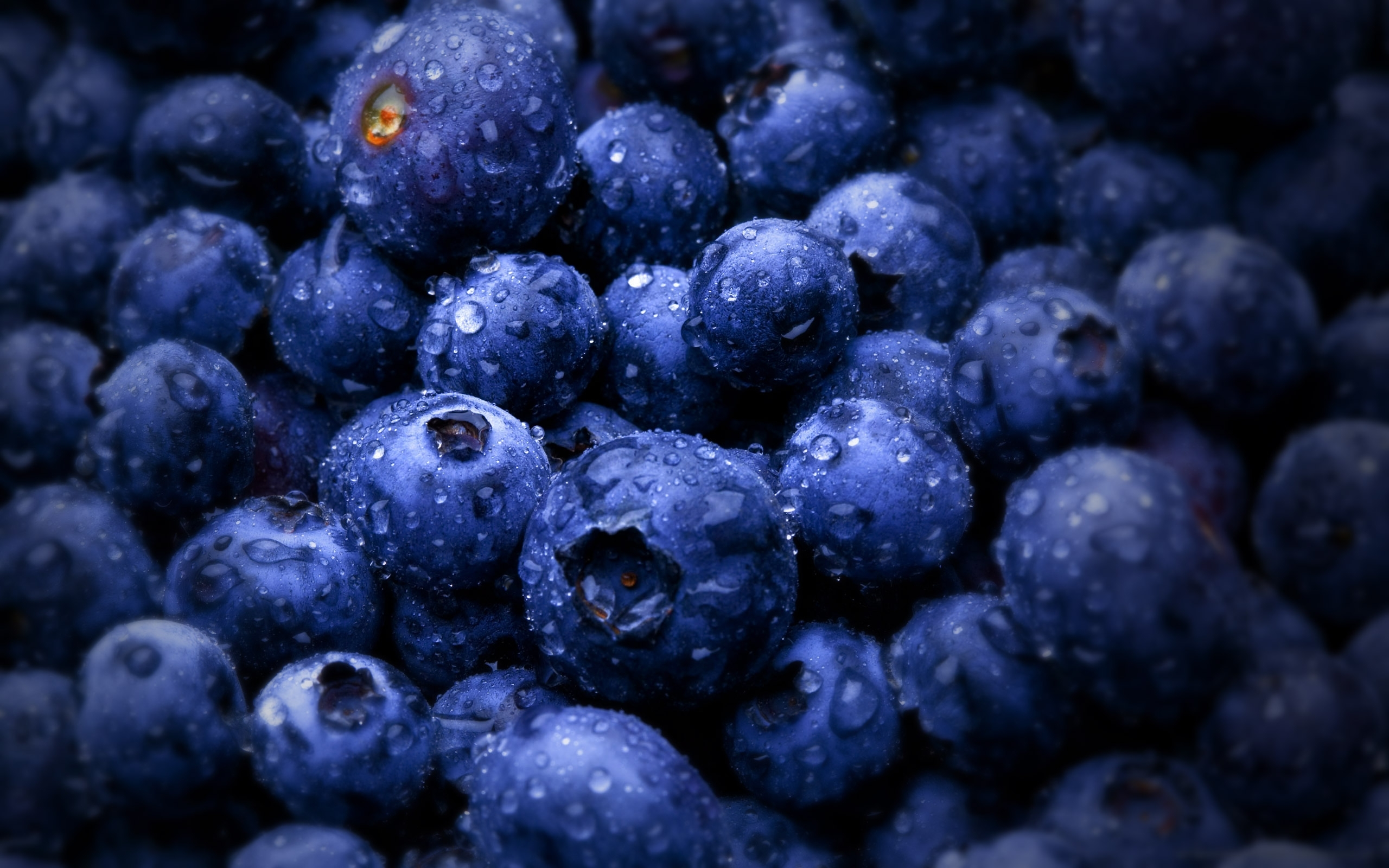 25809 download wallpaper Food, Bilberries, Berries screensavers and pictures for free
