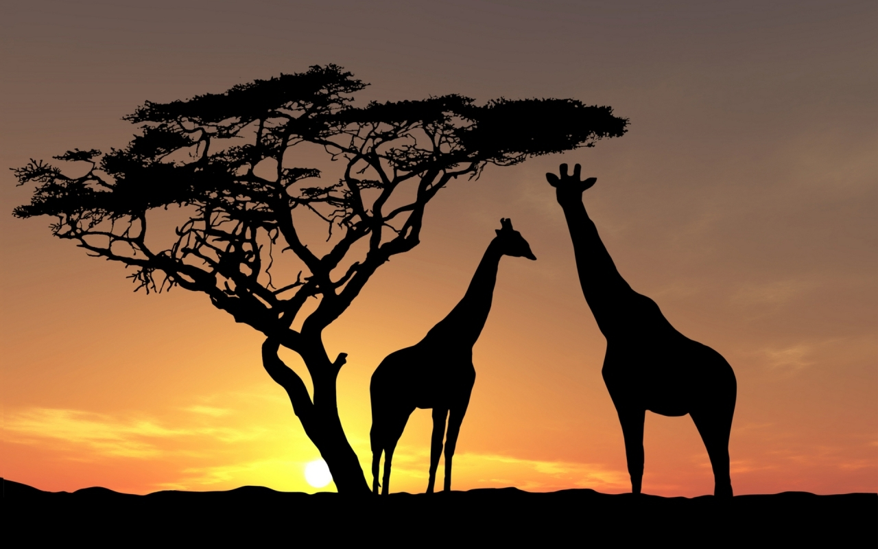 34882 download wallpaper Animals, Giraffes screensavers and pictures for free