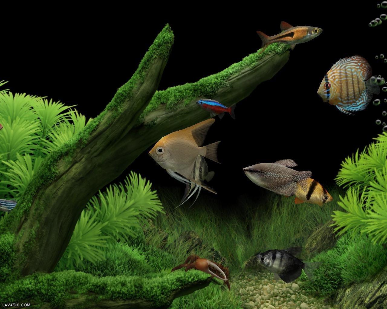 22845 Заставки и Обои Рыбы на телефон. Скачать Рыбы, Животные картинки бесплатно