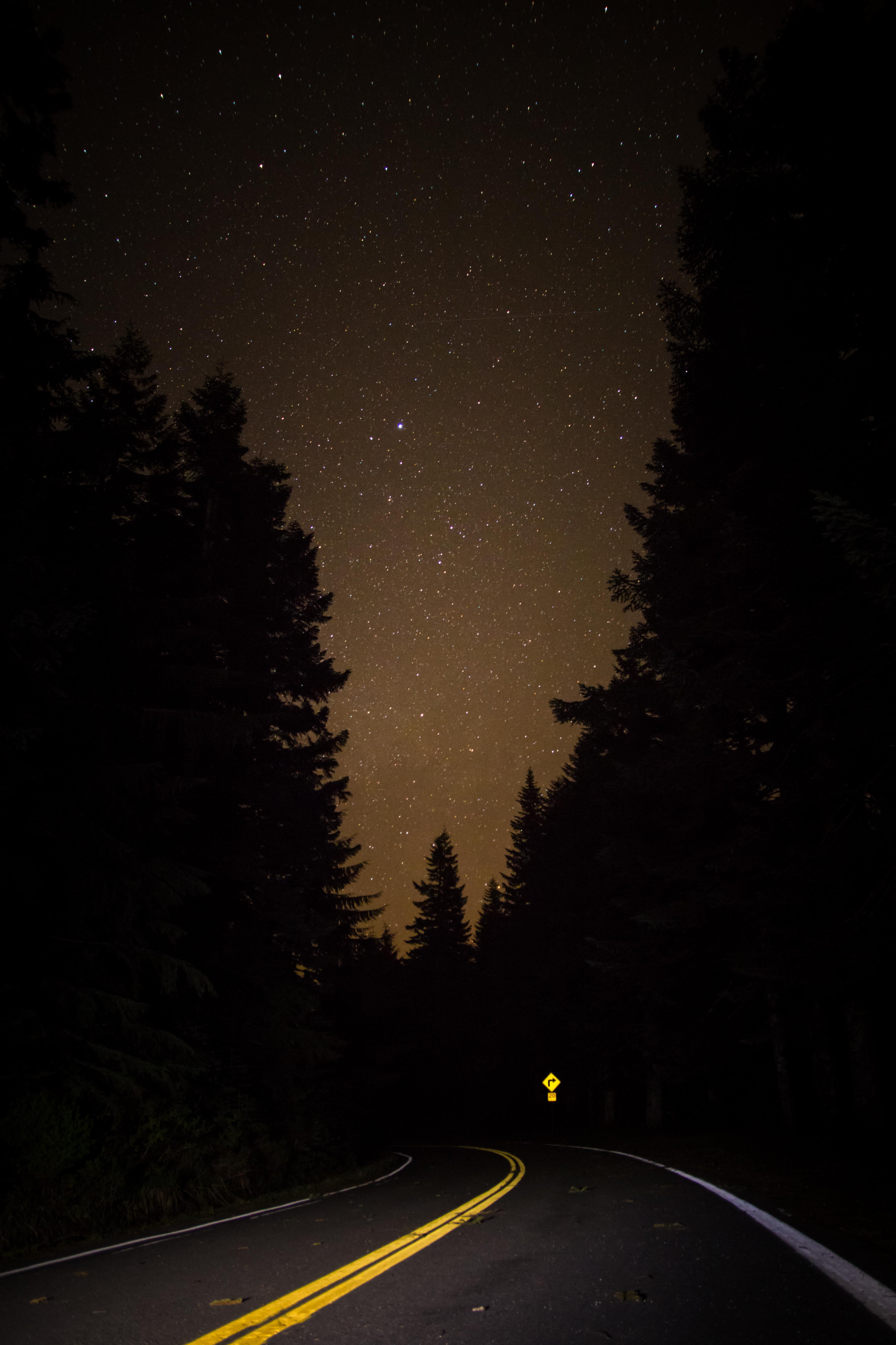 82504 скачать обои Дорога, Ночь, Темные, Лес, Звездное Небо - заставки и картинки бесплатно