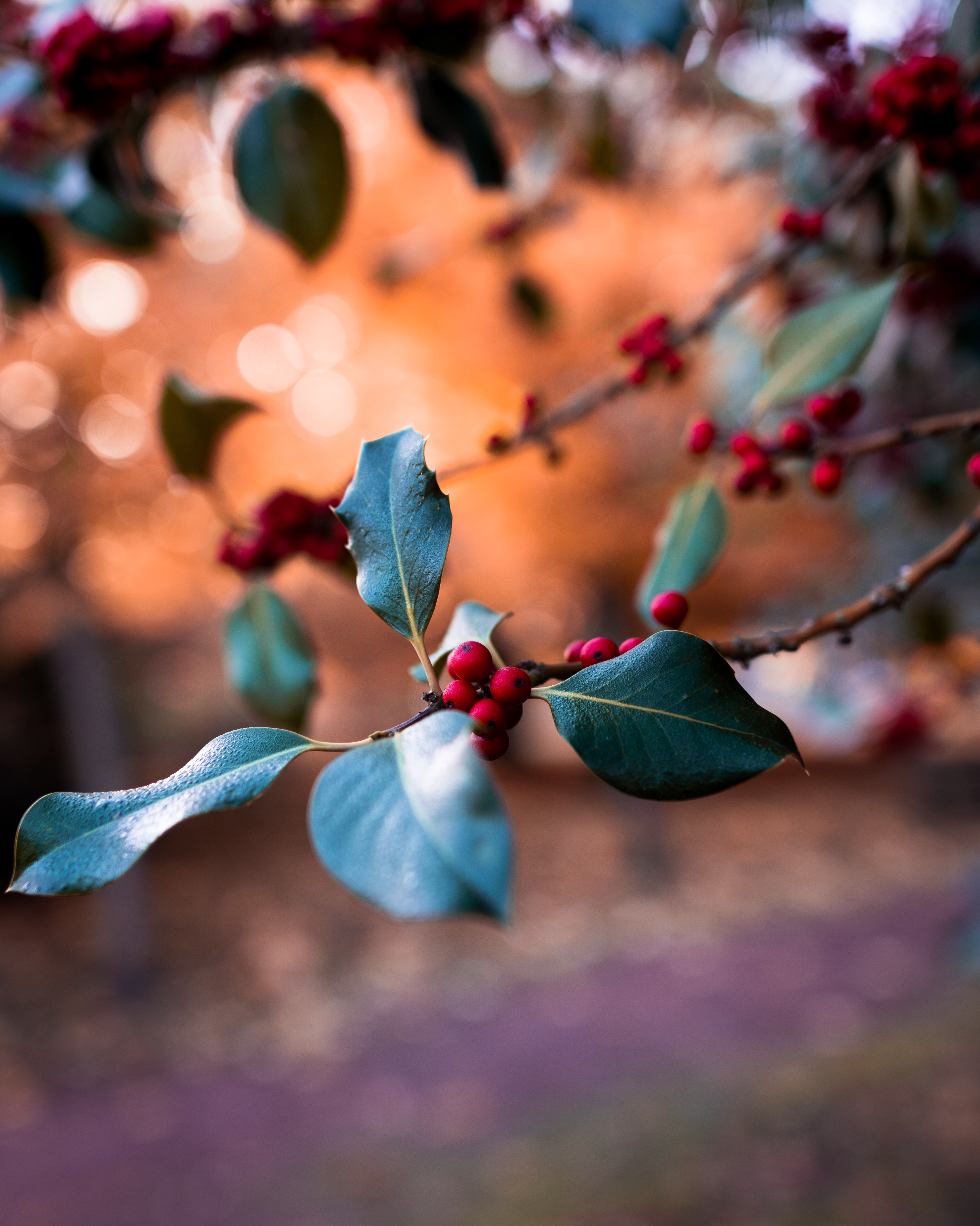 139292 download wallpaper Macro, Branch, Blur, Smooth, Berries screensavers and pictures for free