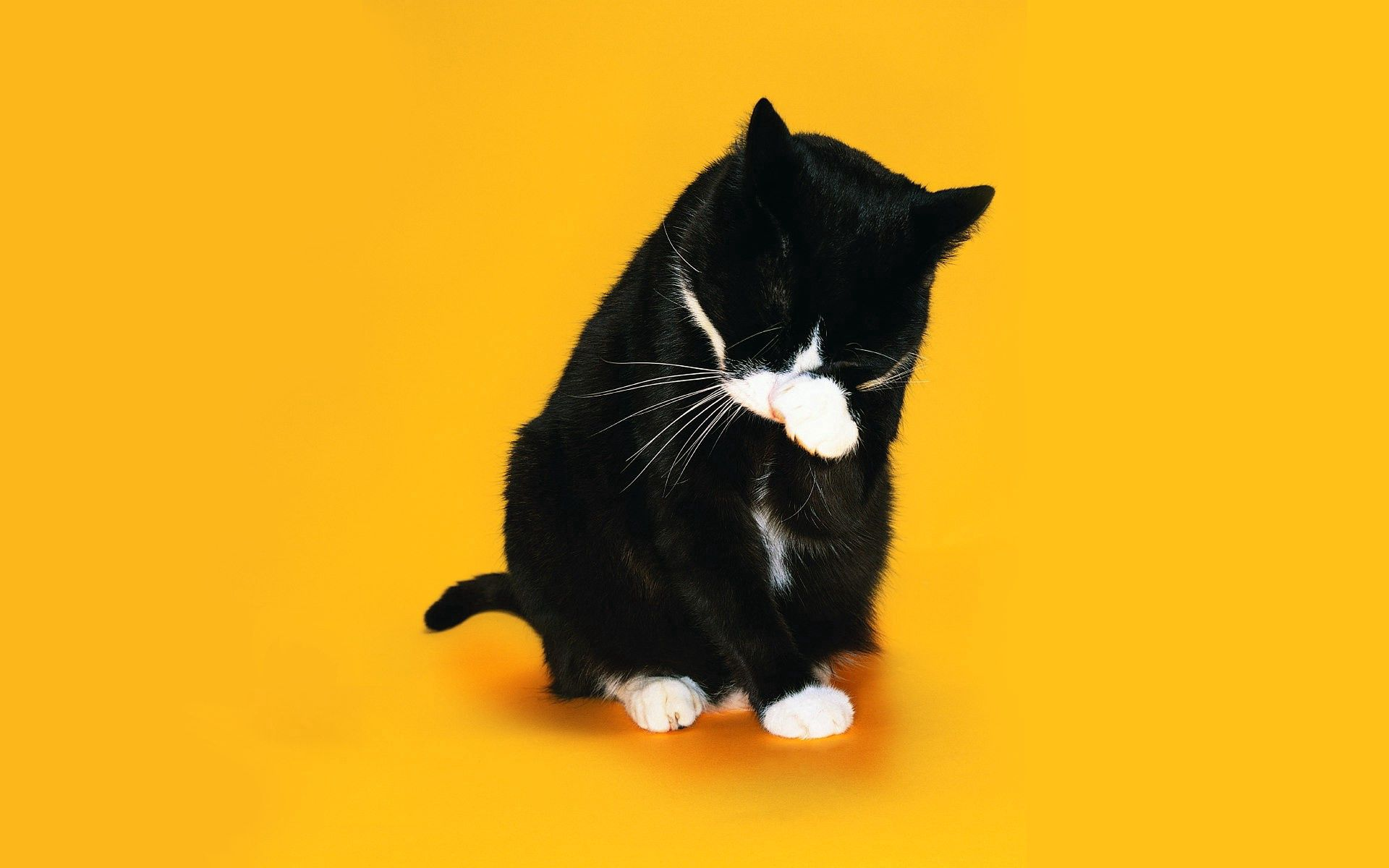 118243 download wallpaper Animals, Cat, Paw, Muzzle, Lick Your Lips, Licking screensavers and pictures for free