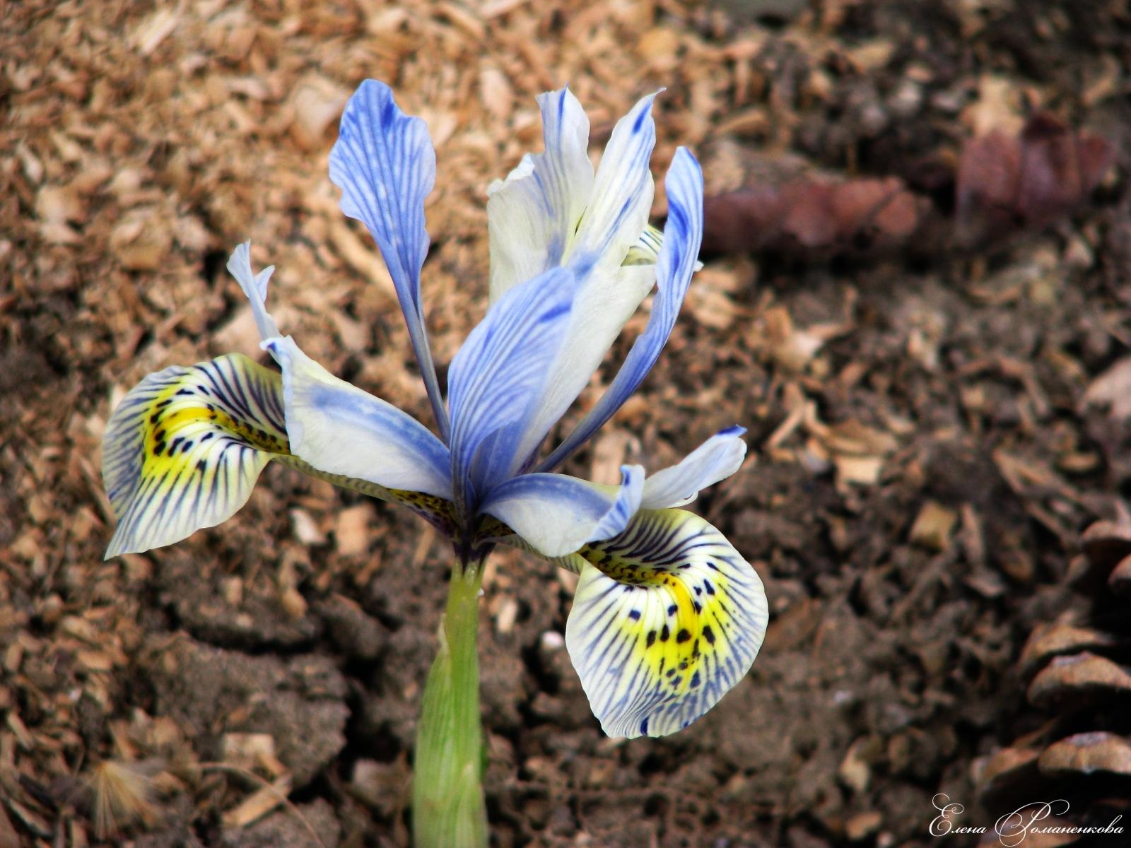 8951 скачать обои Растения, Цветы - заставки и картинки бесплатно
