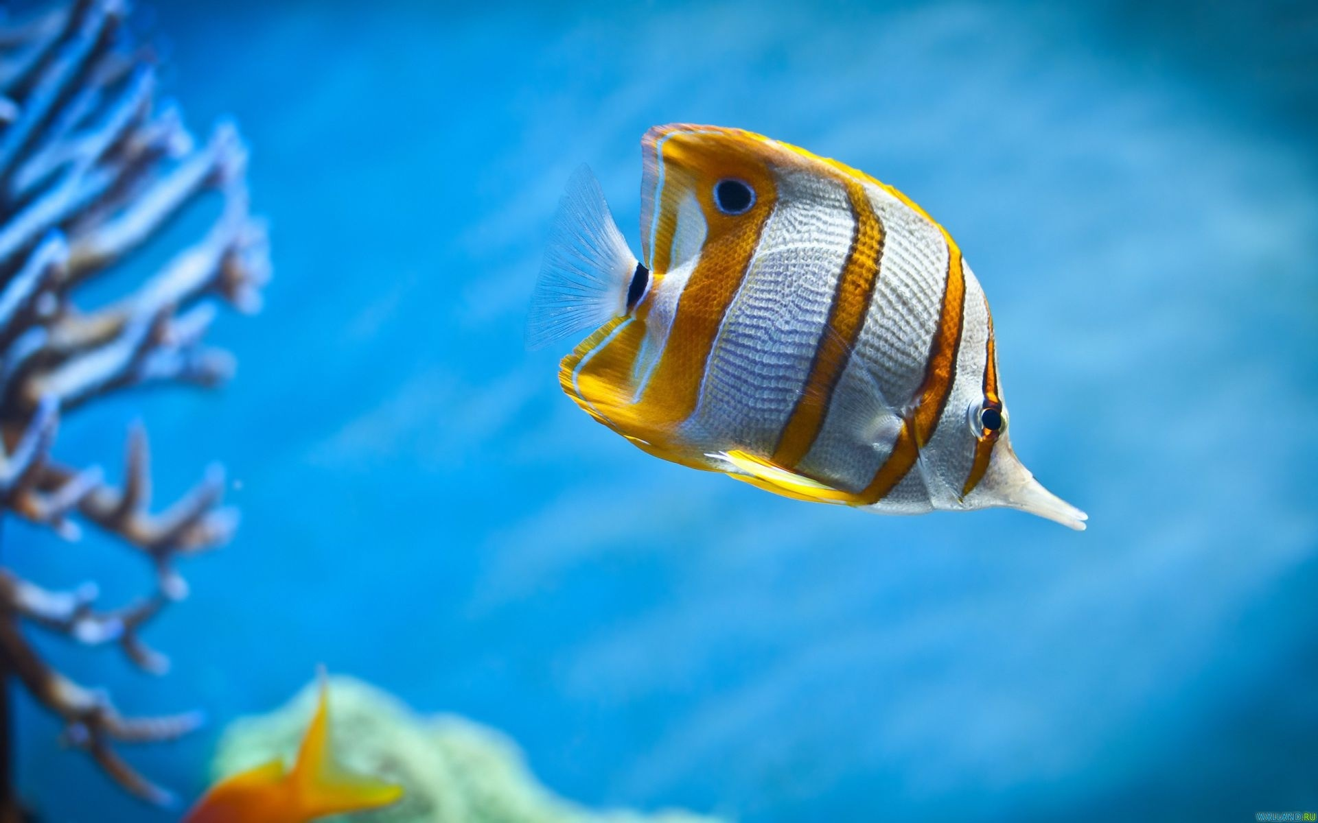 20210 download wallpaper Animals, Fishes screensavers and pictures for free