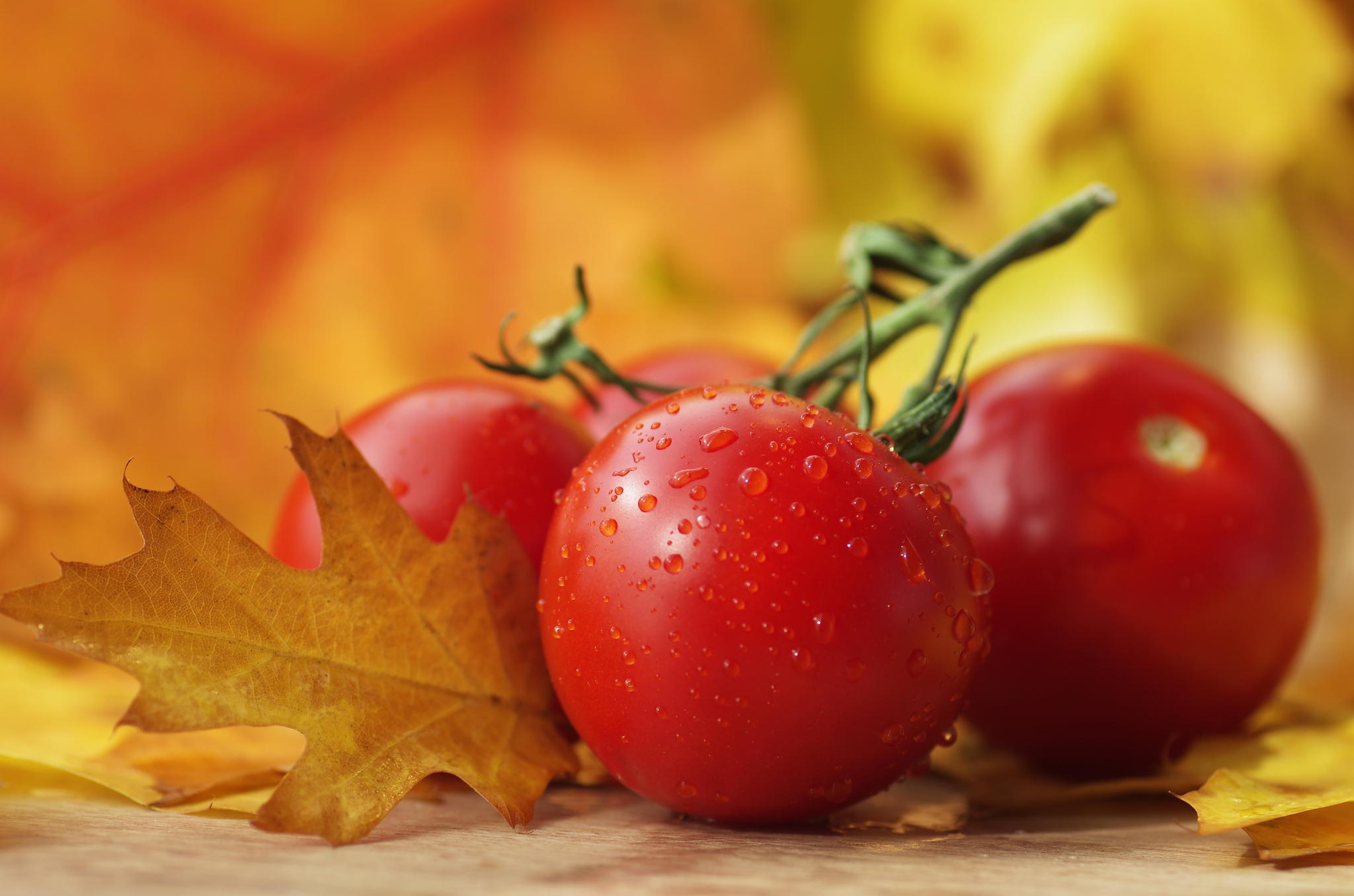 99097 Заставки и Обои Овощи на телефон. Скачать Еда, Овощи, Капли, Томаты картинки бесплатно