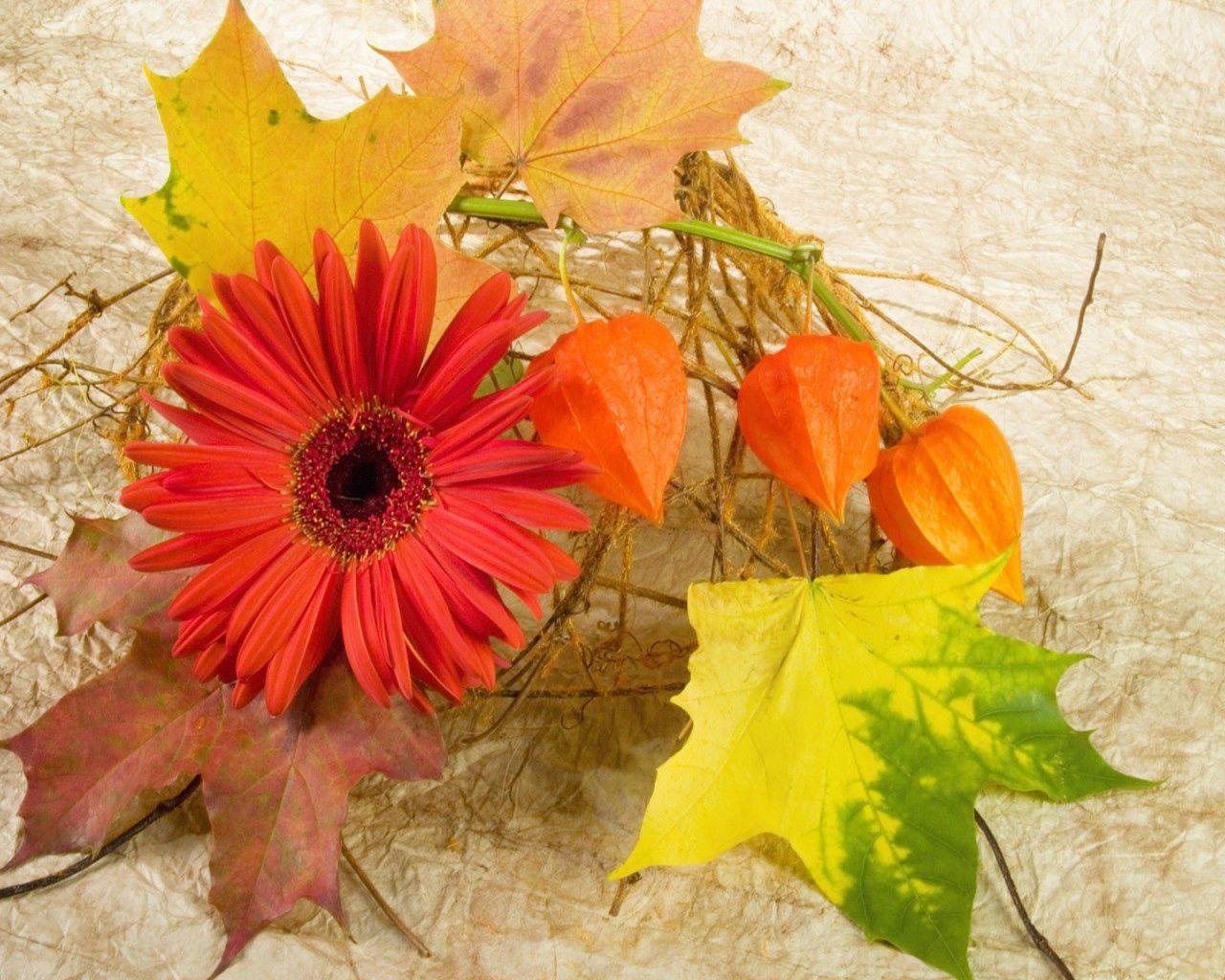 106005 скачать обои Цветы, Гербера, Физалис, Листья, Кленовые, Осень, Композиция - заставки и картинки бесплатно