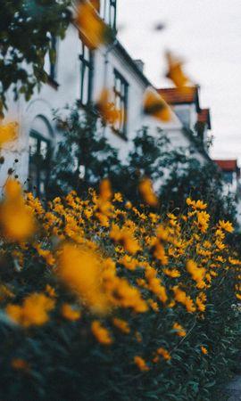 87235 descargar fondo de pantalla Flores, Cama De Flores, Parterre, Plantas, Decorativo: protectores de pantalla e imágenes gratis