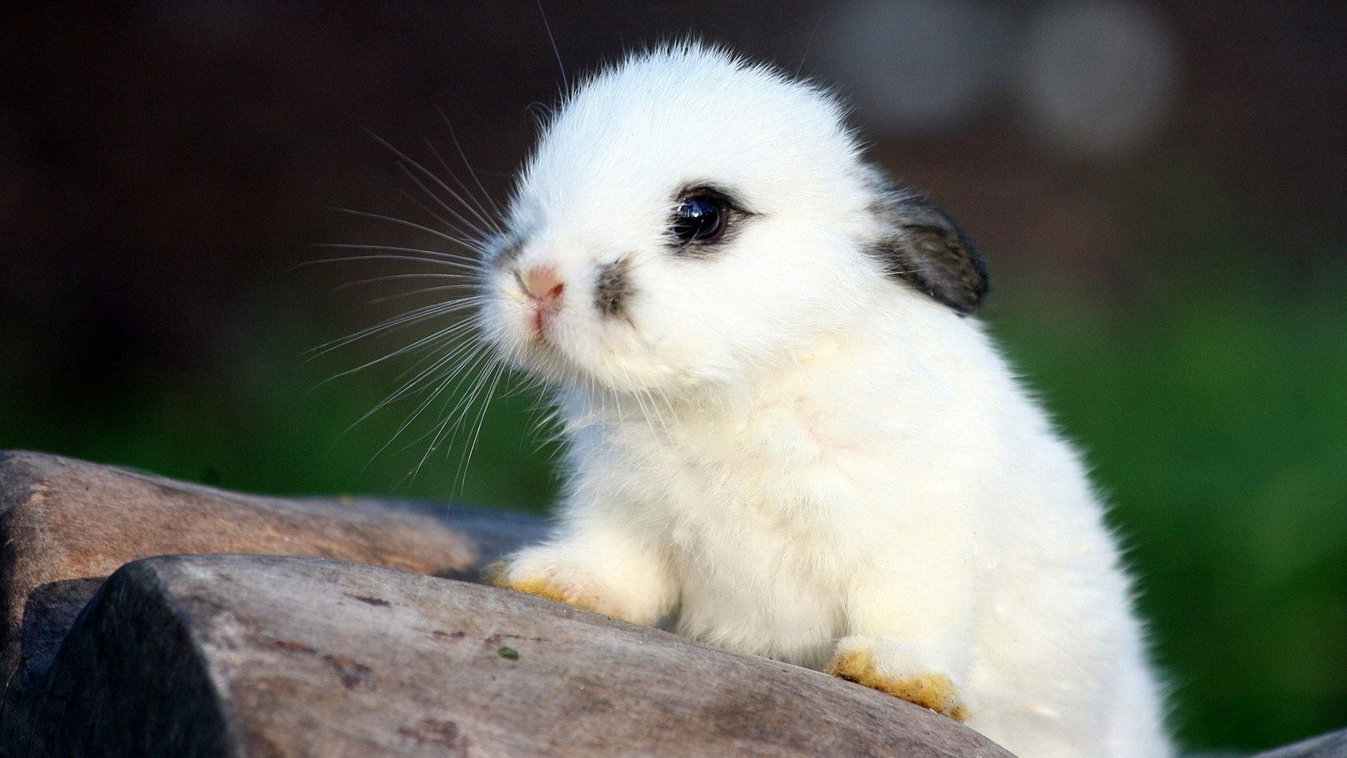 Download mobile wallpaper Animals, Muzzle, Spotted, Spotty, Ears, Fear, Rabbit for free.