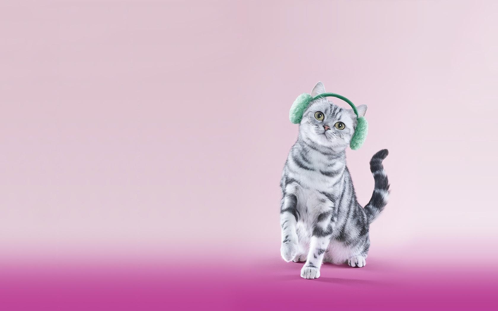 23928 скачать обои Животные, Кошки (Коты, Котики) - заставки и картинки бесплатно