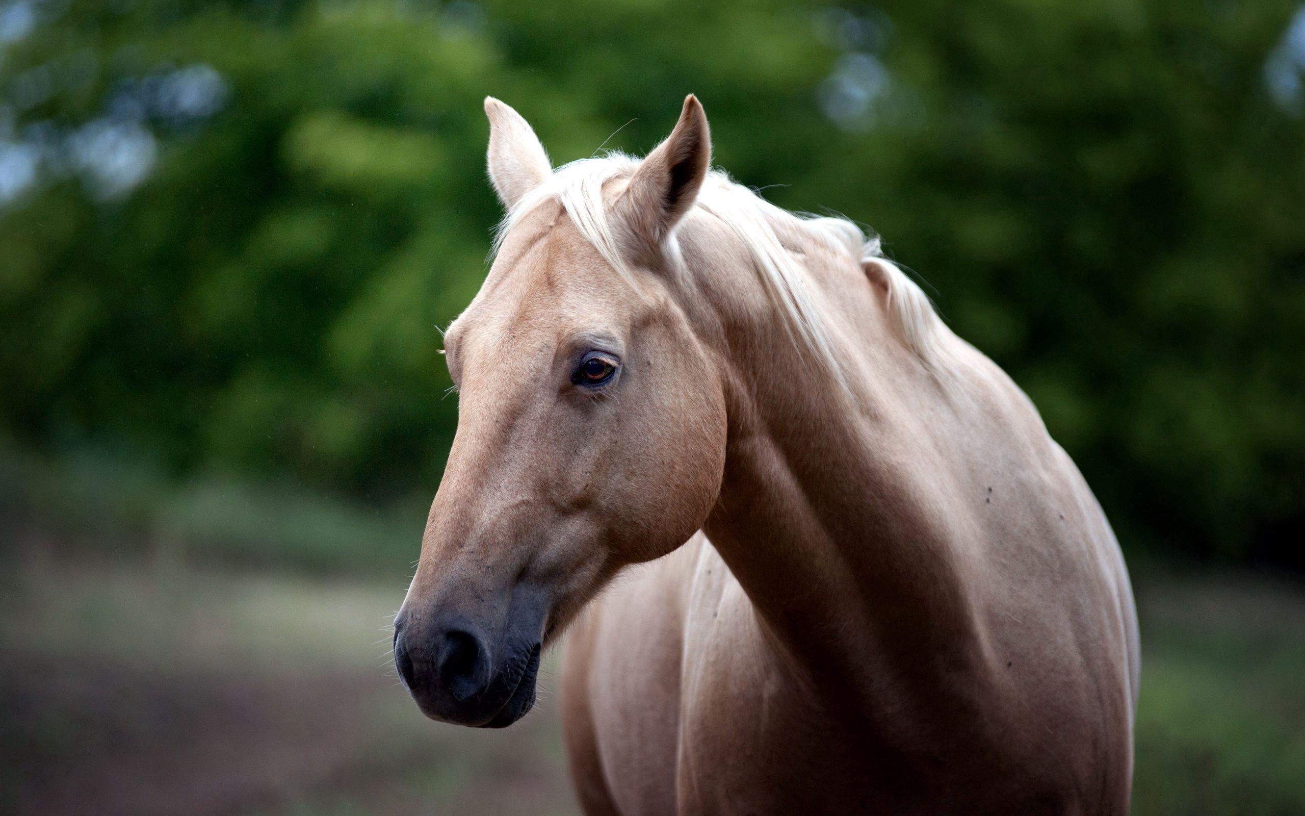 85372 Protetores de tela e papéis de parede Opinião em seu telefone. Baixe Cavalo, Animais, Focinho, Visão, Opinião fotos gratuitamente