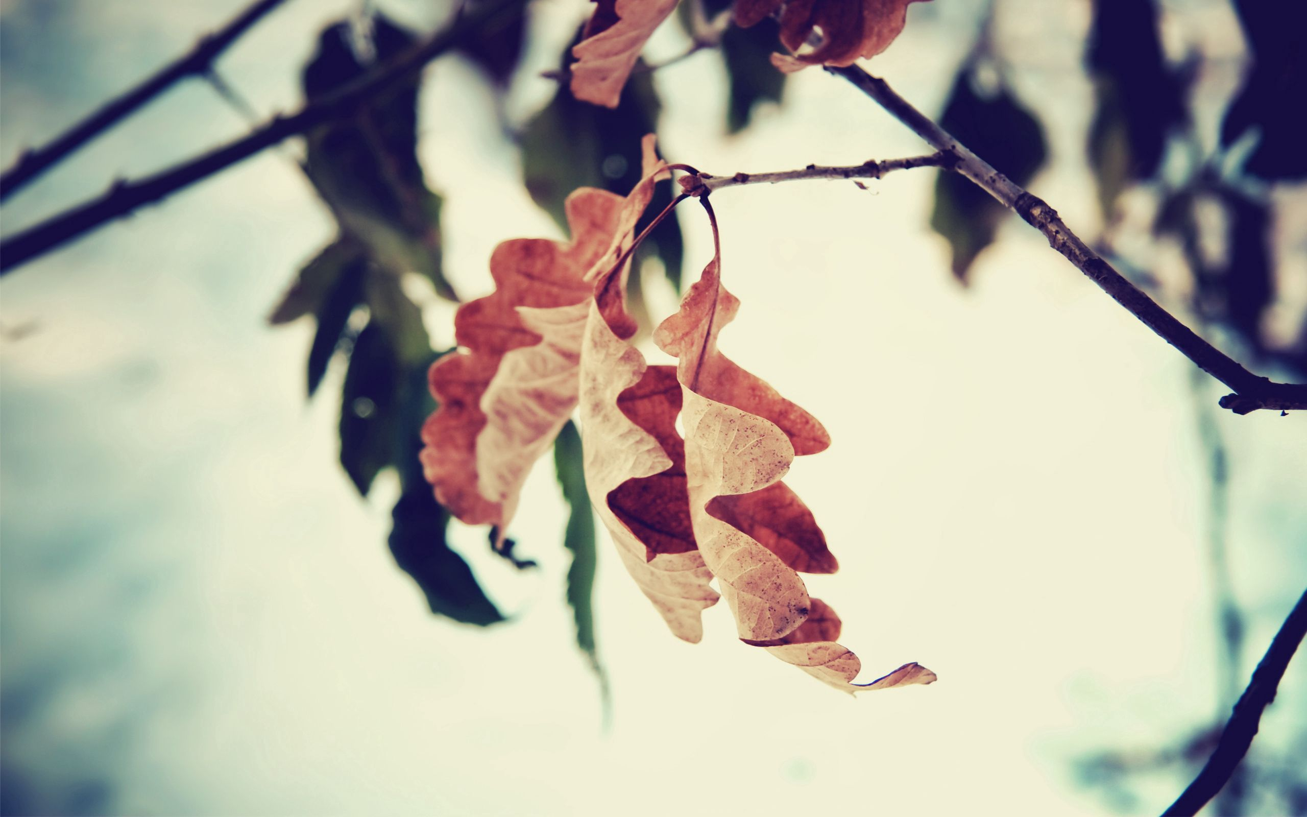 126766 download wallpaper Macro, Leaves, Branch, Brown, Dried, Autumn screensavers and pictures for free