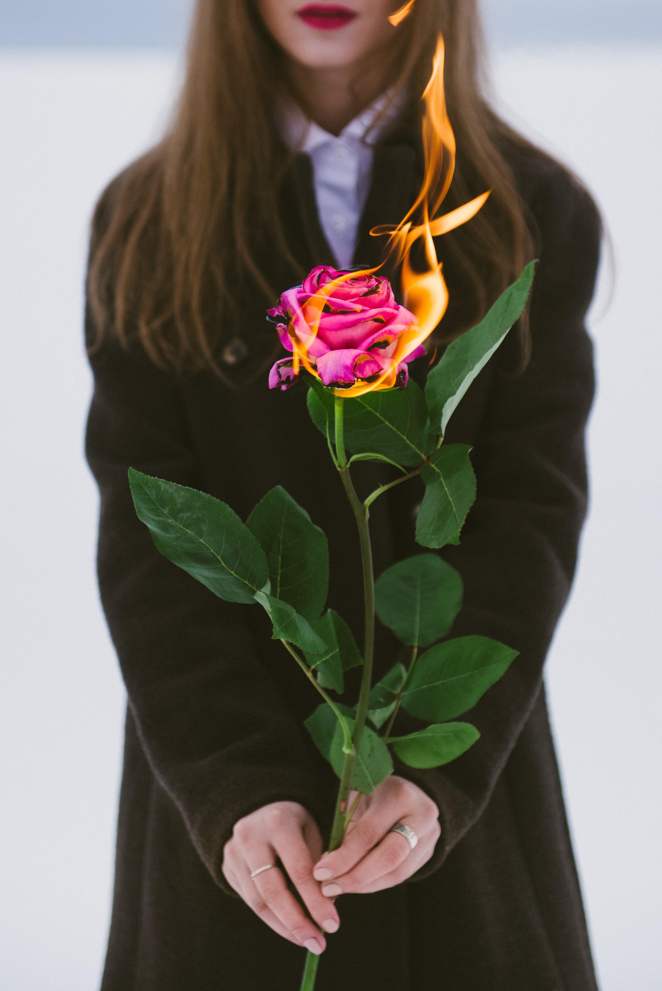 131875 免費下載壁紙 杂项, 女孩, 玫瑰花, 花, 花卉, 火, 手, 手部, 火焰 屏保和圖片