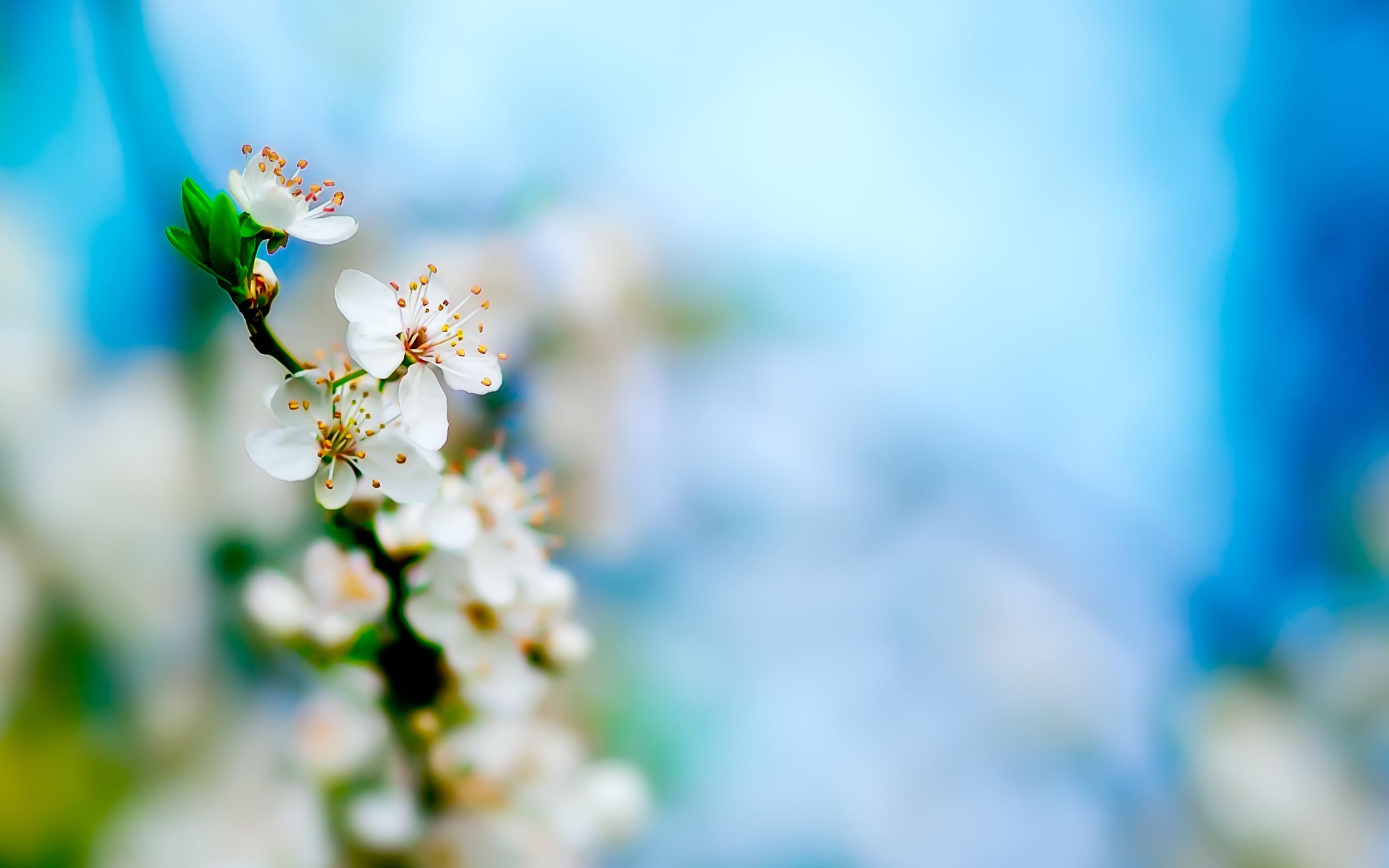 20605 скачать обои Растения, Цветы - заставки и картинки бесплатно