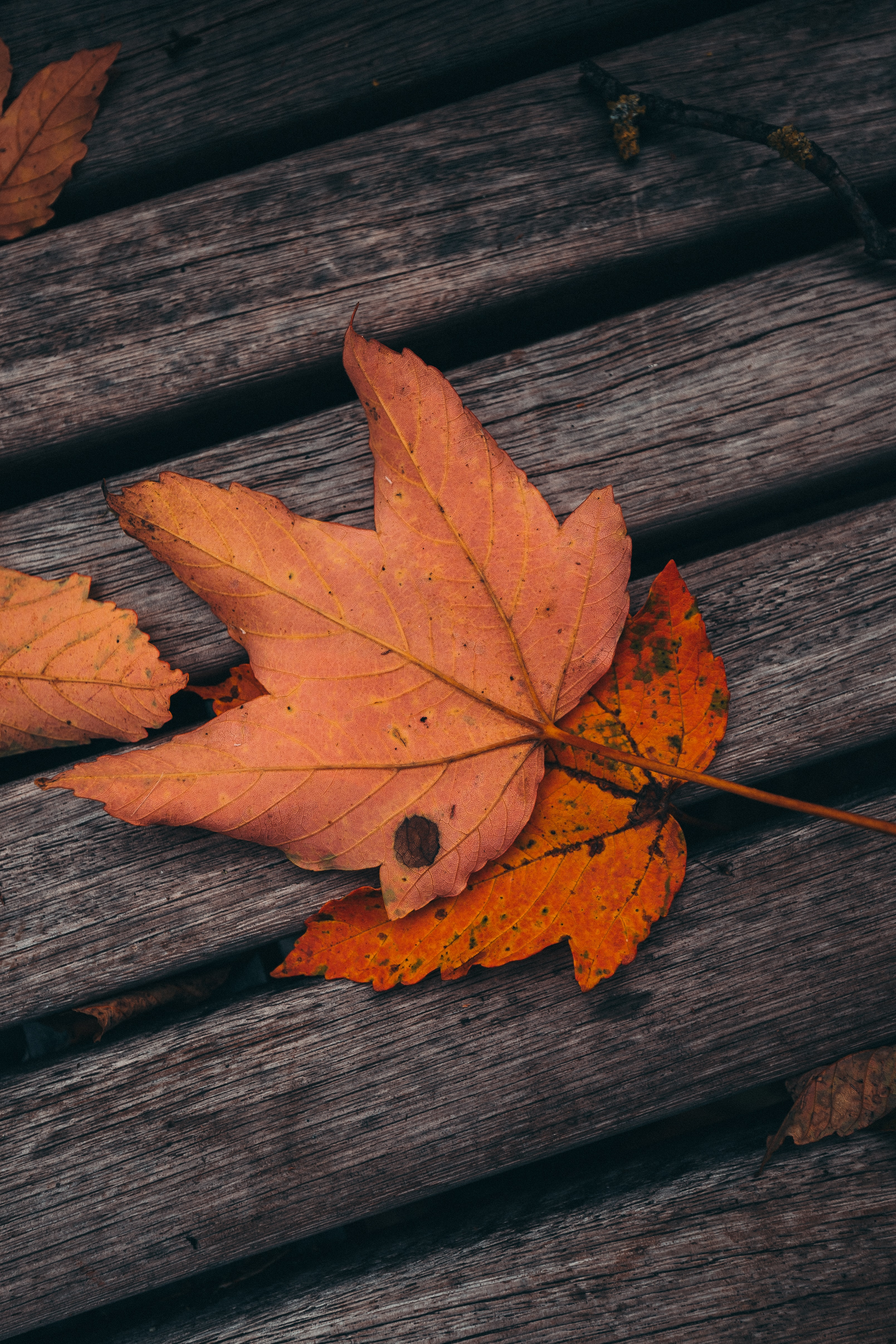 81406 download wallpaper Miscellanea, Miscellaneous, Maple, Leaves, Autumn, Planks, Board, Wood, Wooden screensavers and pictures for free