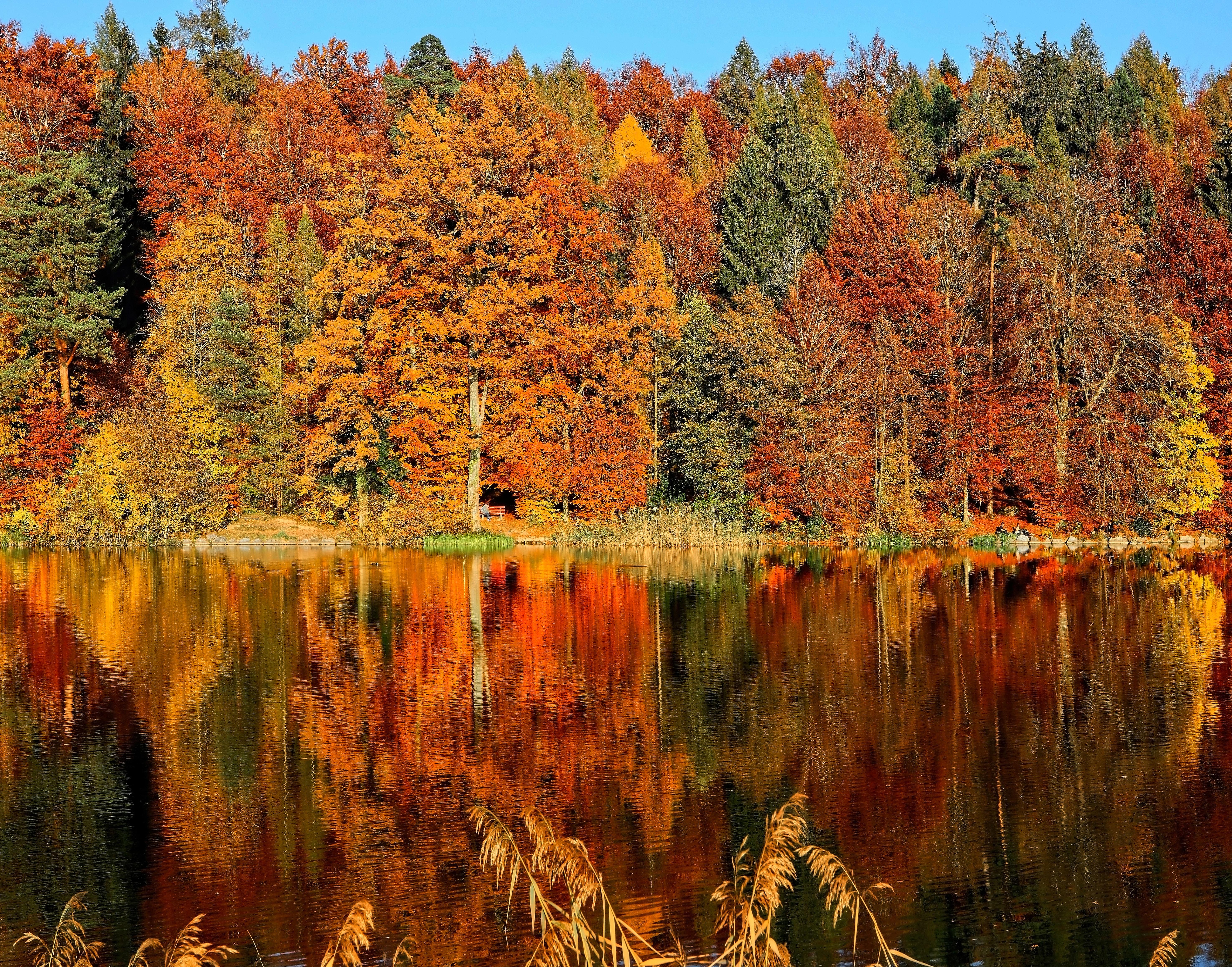 87908 завантажити шпалери Природа, Річка, Дерева, Осінь, Відображення - заставки і картинки безкоштовно