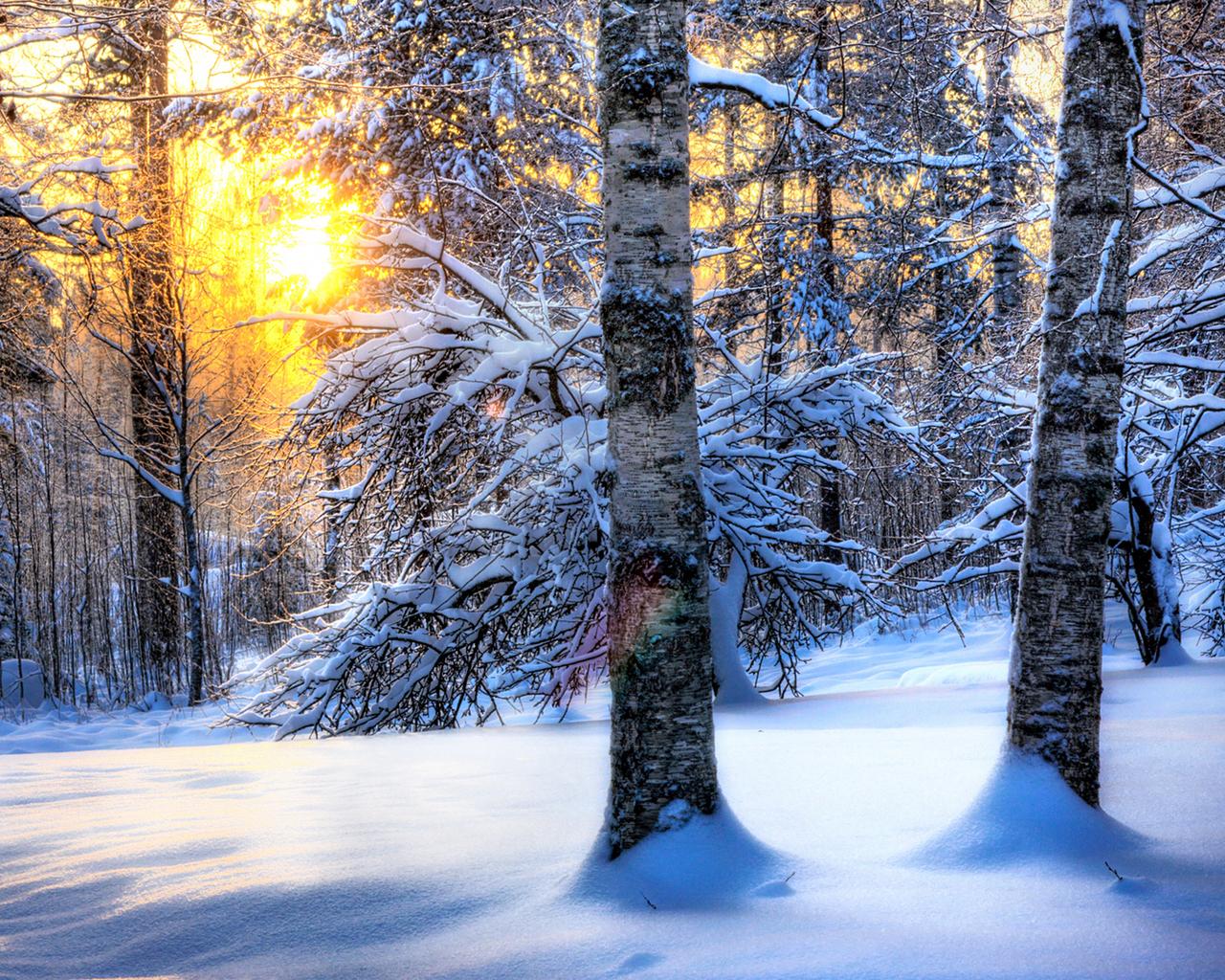 13509 скачать обои Пейзаж, Зима, Деревья, Солнце, Снег - заставки и картинки бесплатно