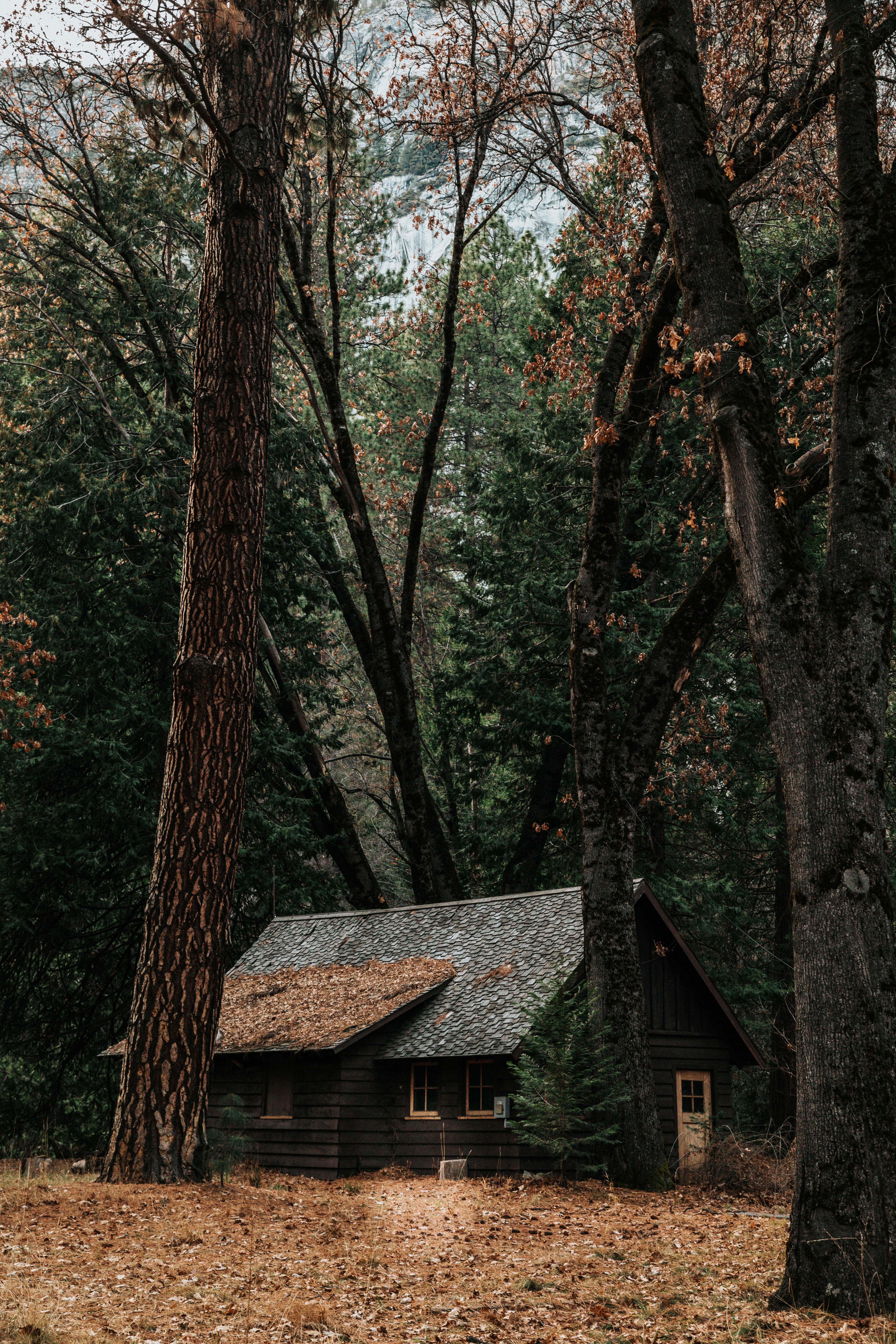 75540 download wallpaper Nature, House, Forest, Privacy, Seclusion, Autumn, Trees screensavers and pictures for free