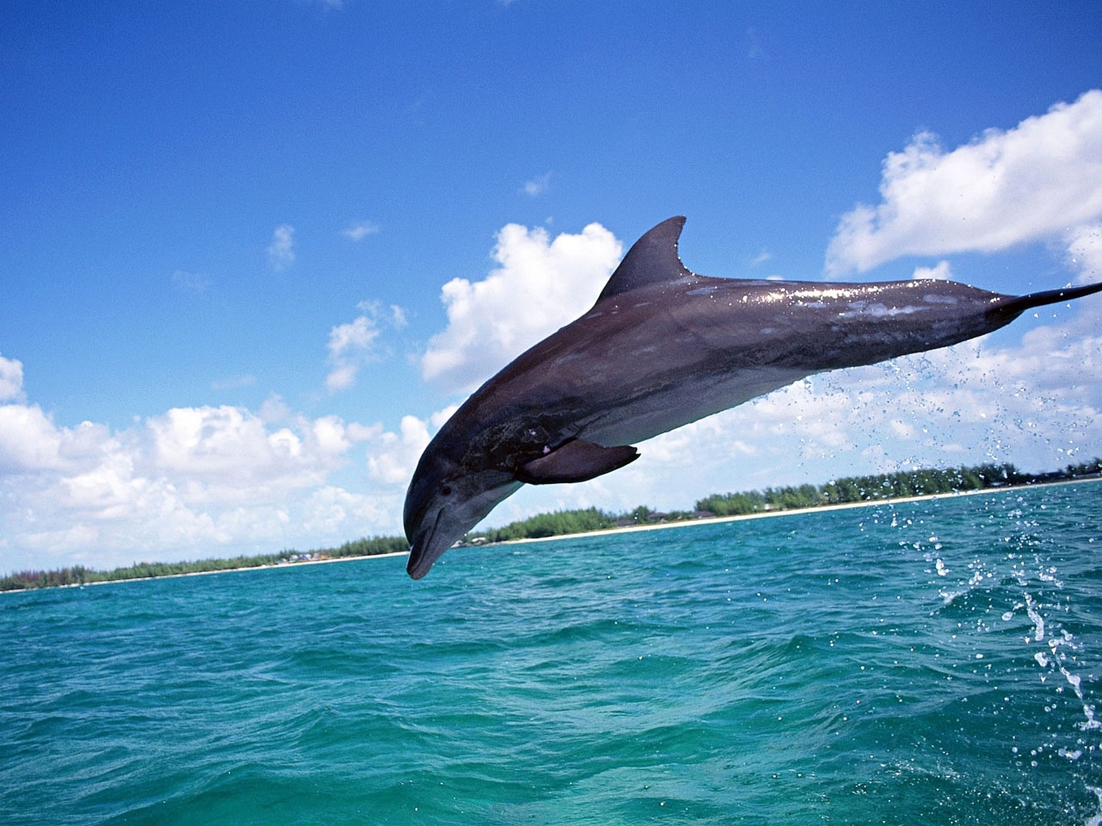 6122 download wallpaper Animals, Dolfins, Sea, Fishes screensavers and pictures for free