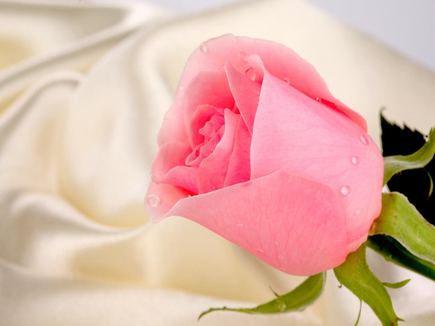 Handy-Wallpaper Pflanzen, Blumen, Roses kostenlos herunterladen.