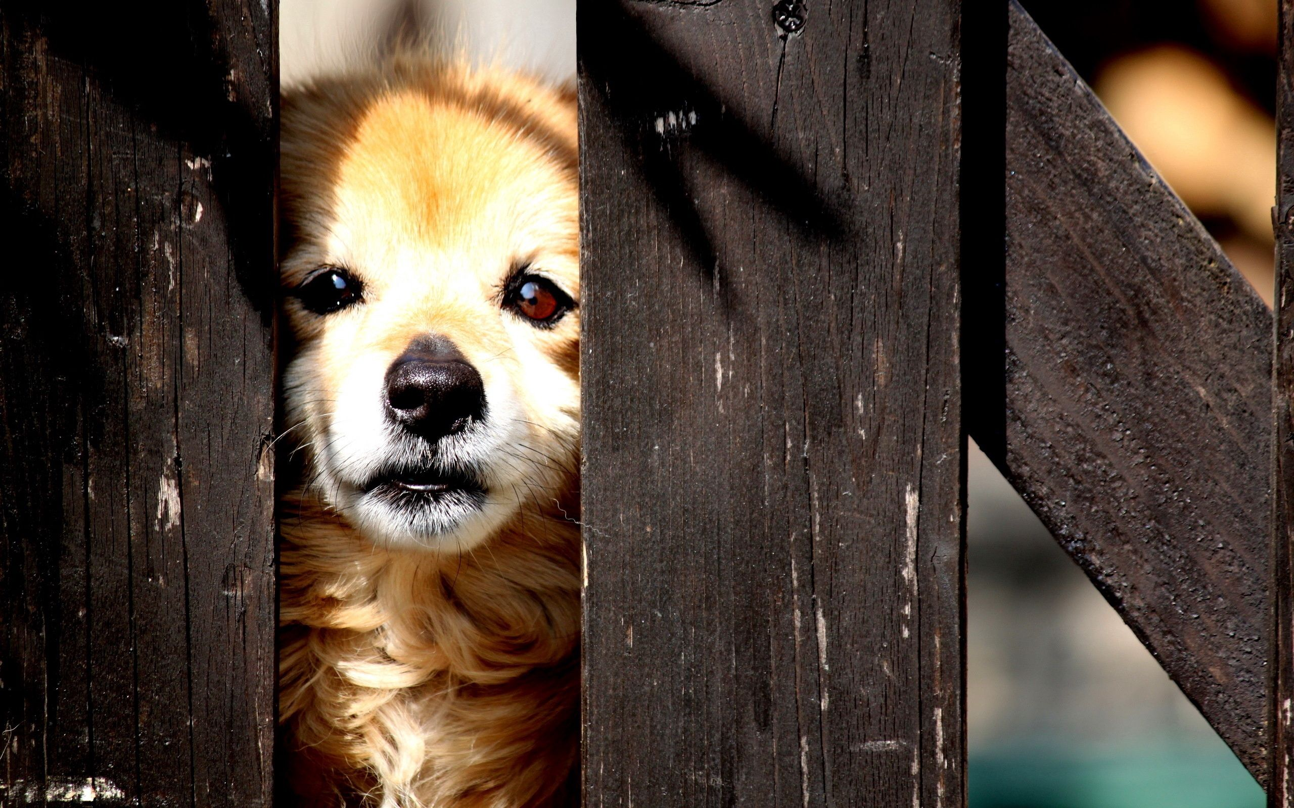 100989 download wallpaper Animals, Puppy, Peek Out, Look Out, Fence, Kid, Tot screensavers and pictures for free