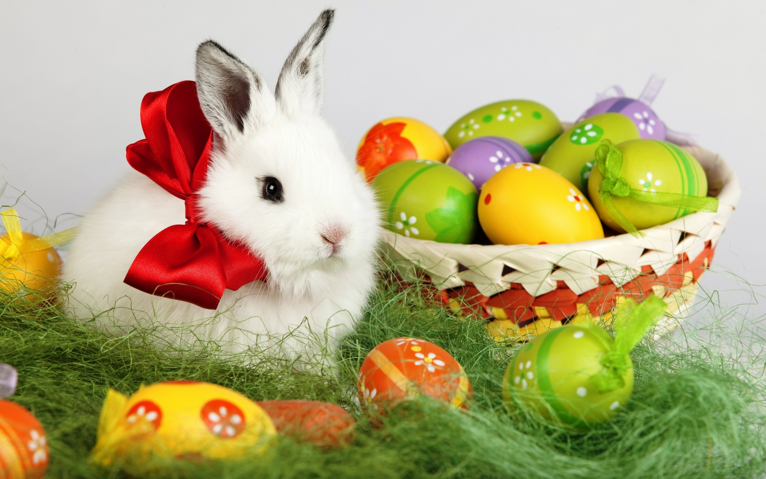 35131 download wallpaper Animals, Rabbits screensavers and pictures for free