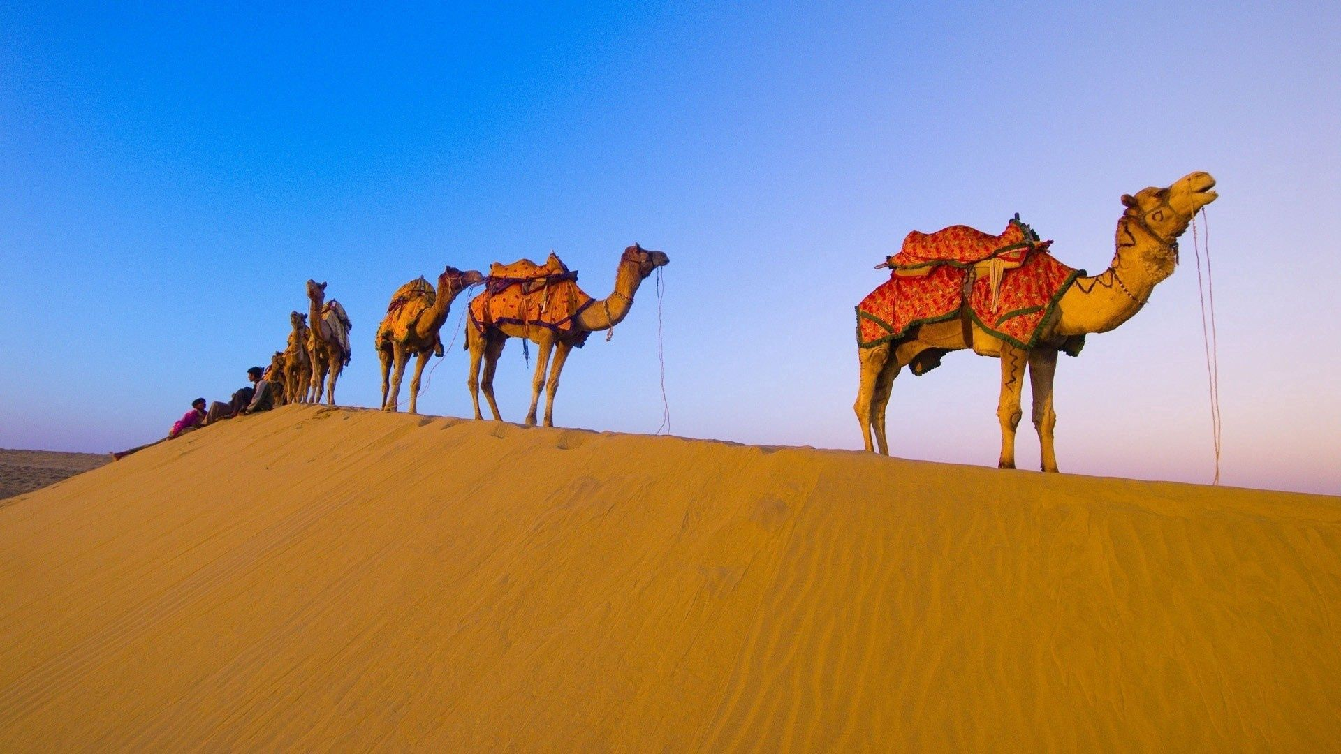 95945 download wallpaper Animals, Caravan, Hike, Campaign, Desert, Camels screensavers and pictures for free